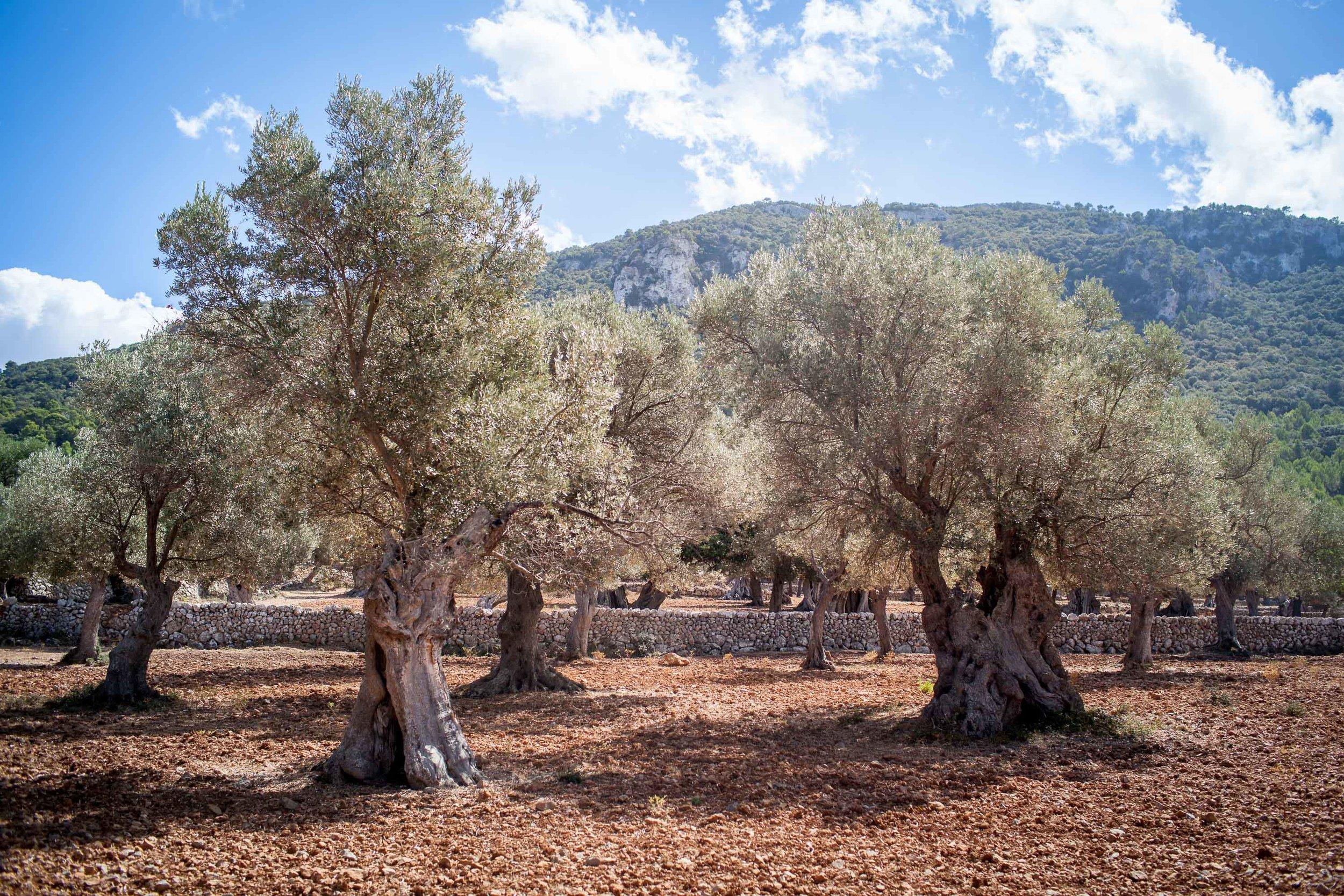 Mallorca-32.jpg