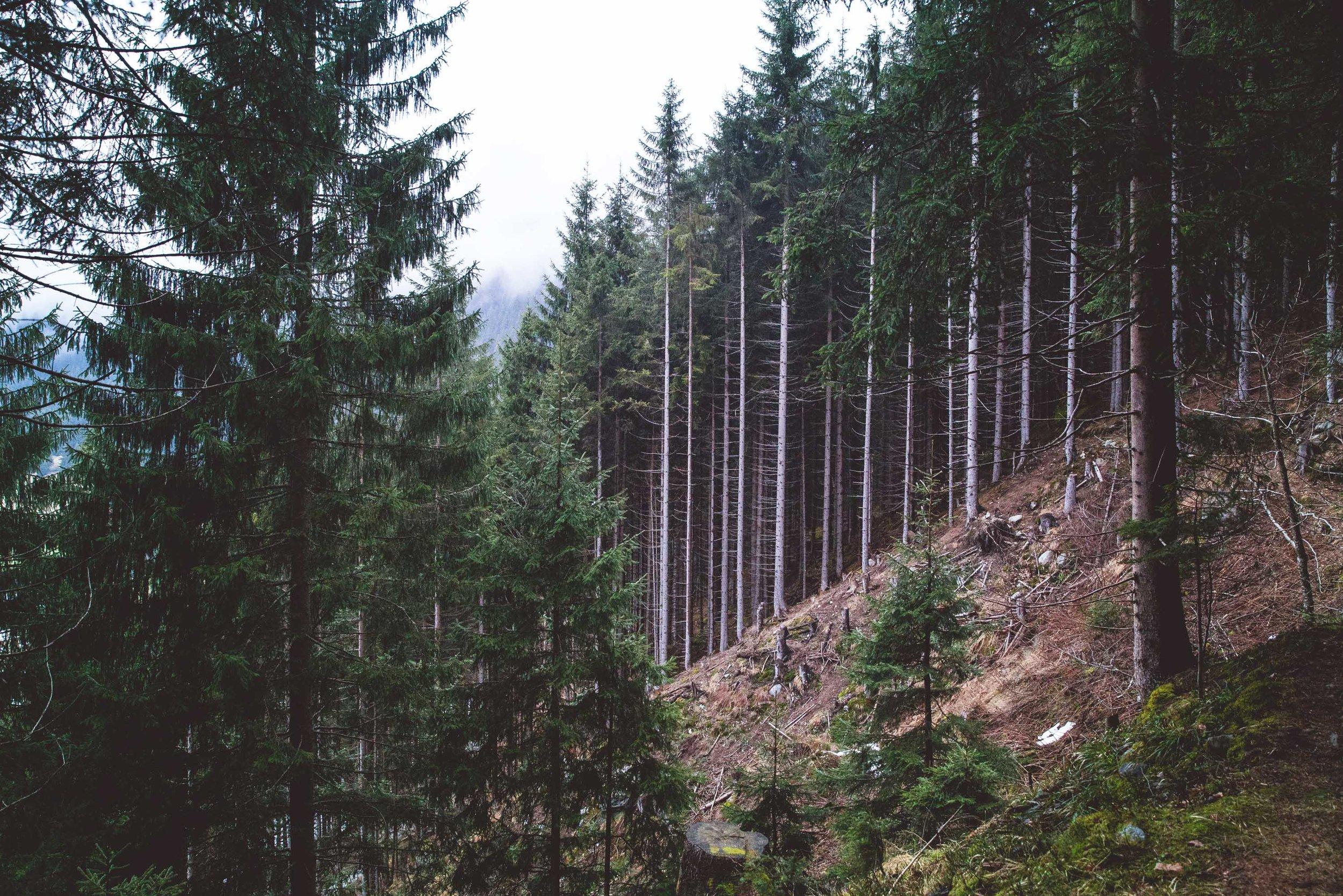 Österreich-9.jpg