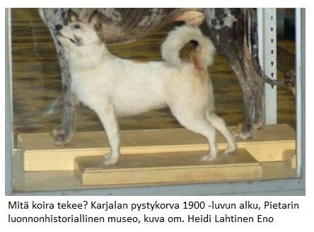Taxidermied_dog