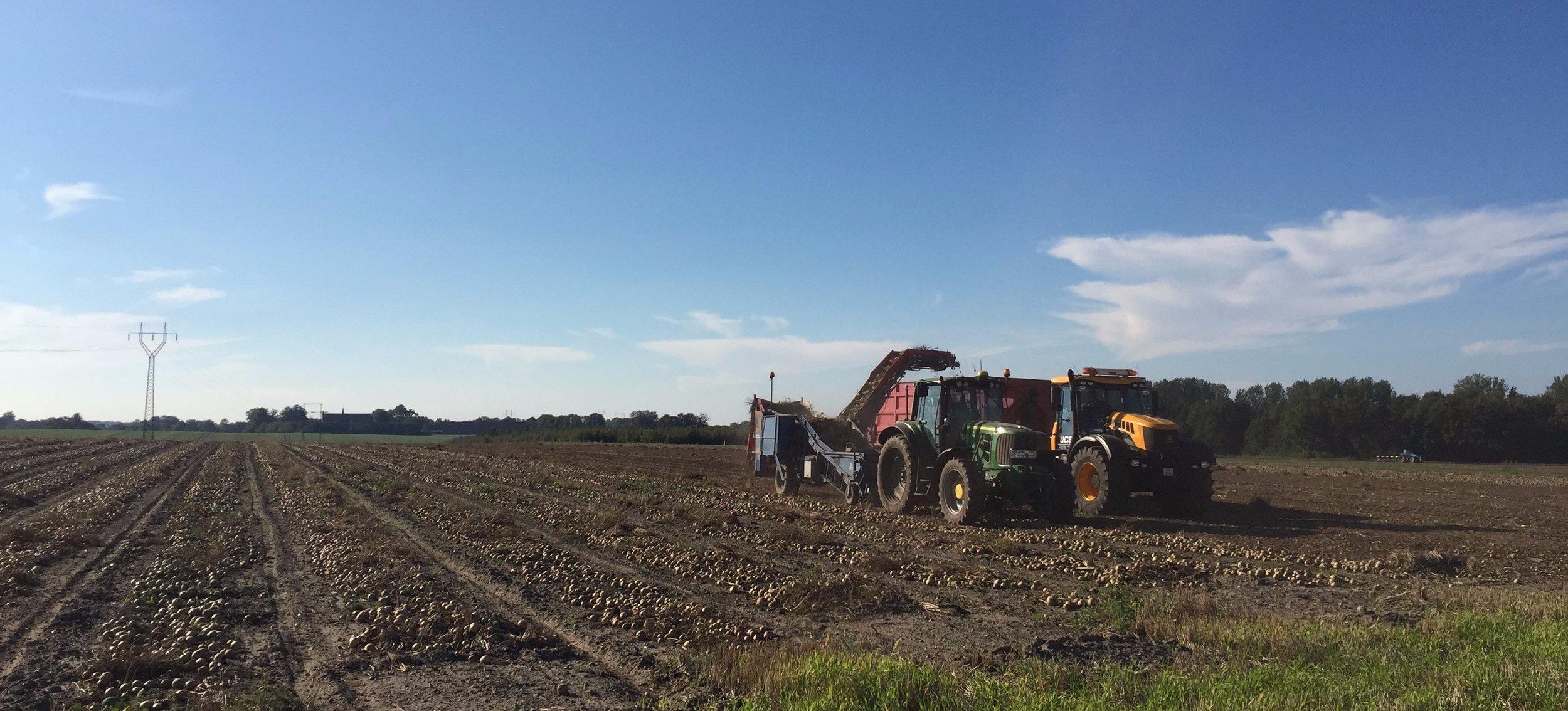 traktorer i løgmark.jpg