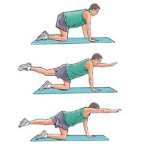 The qudraped series of exercises is one progression of low back spinal stability.