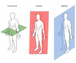 The transverse is usually the hardest plane for a high level of function.