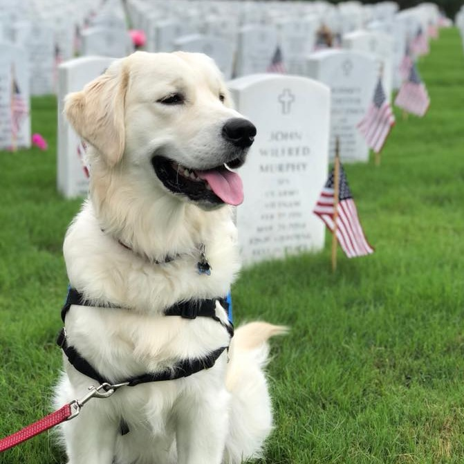 - Norman D. Valor was named in honor of those who served on D-Day at the Normandy landings. He will grow up to help his forever veteran and remind all of us of the sacrifices made during WWII.Norman D. graduated and was placed with his forever veteran in May 2019.