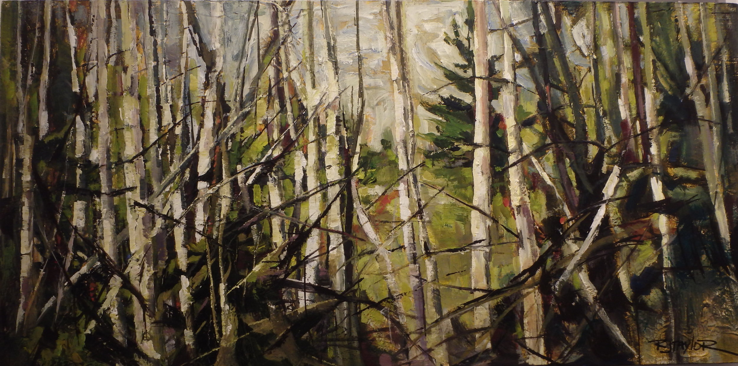 """Birches"" 18x36 acrylic on canvas   SOLD"