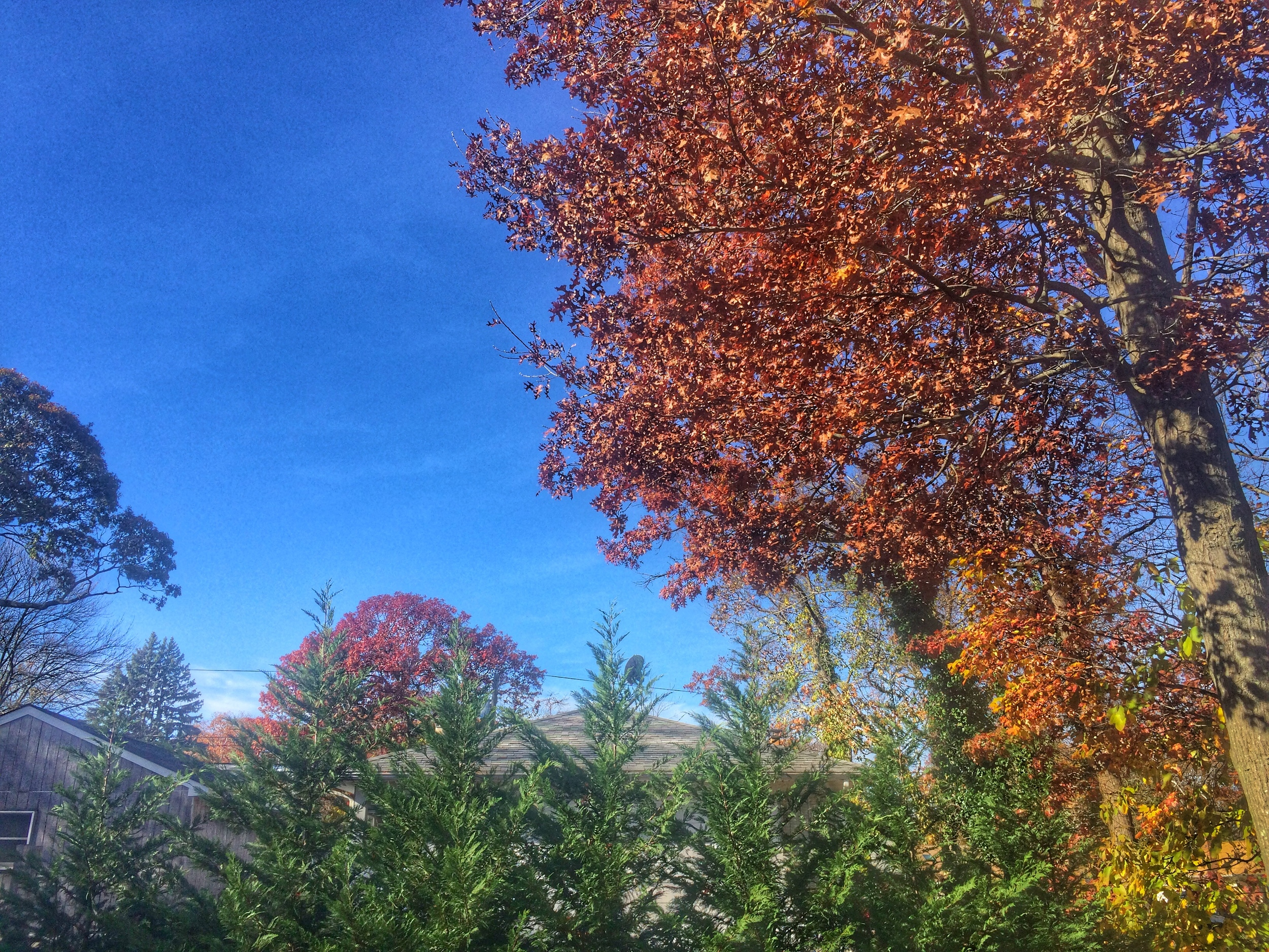 Fall Long Island