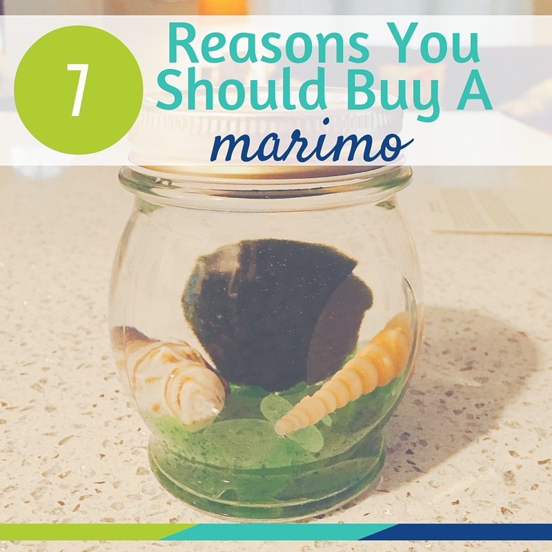 Why To Get A Marimo