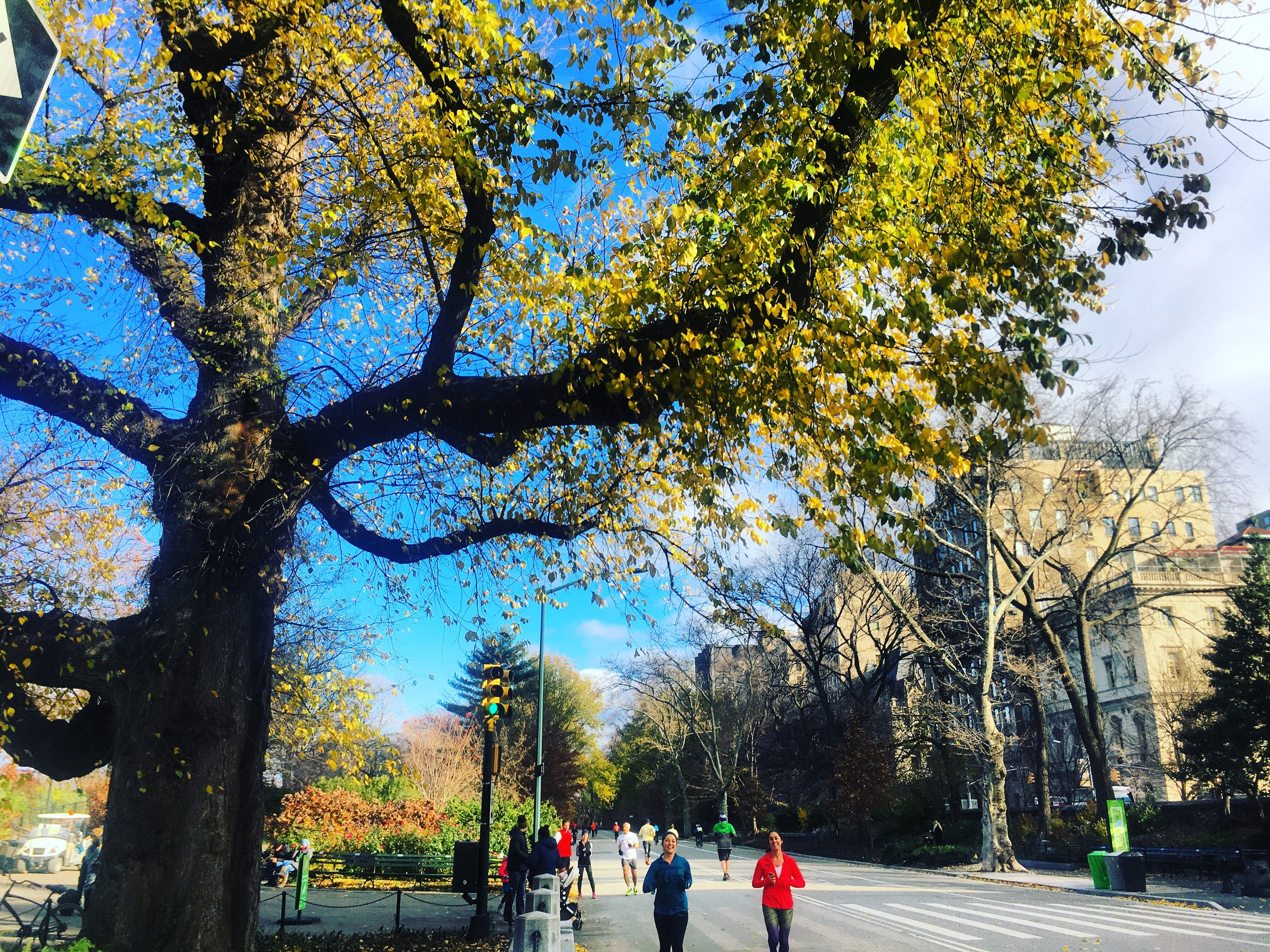 Central Park Running