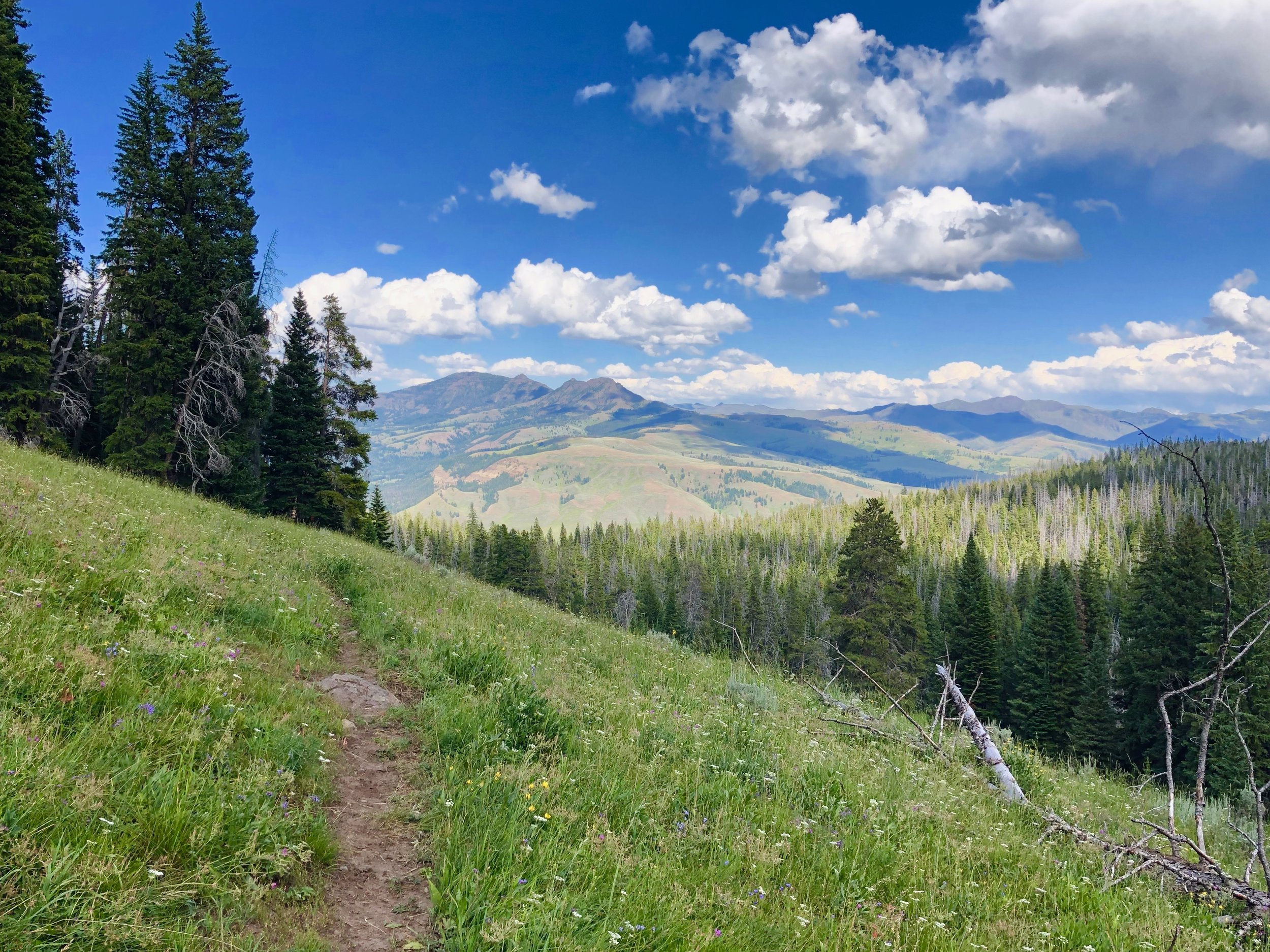 Through meadows and thickly forested bear country
