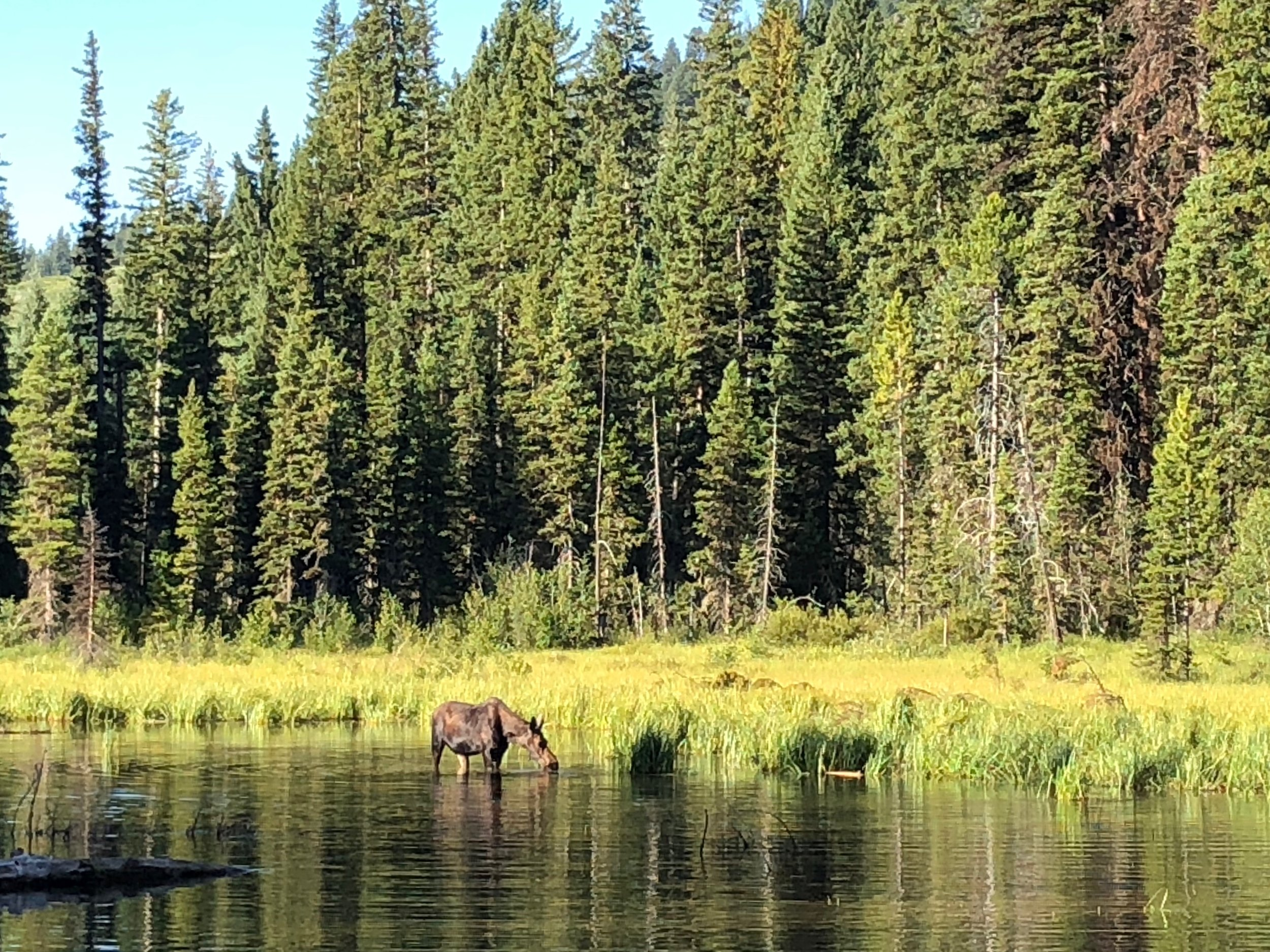 A spur trail to Moose Ponds...