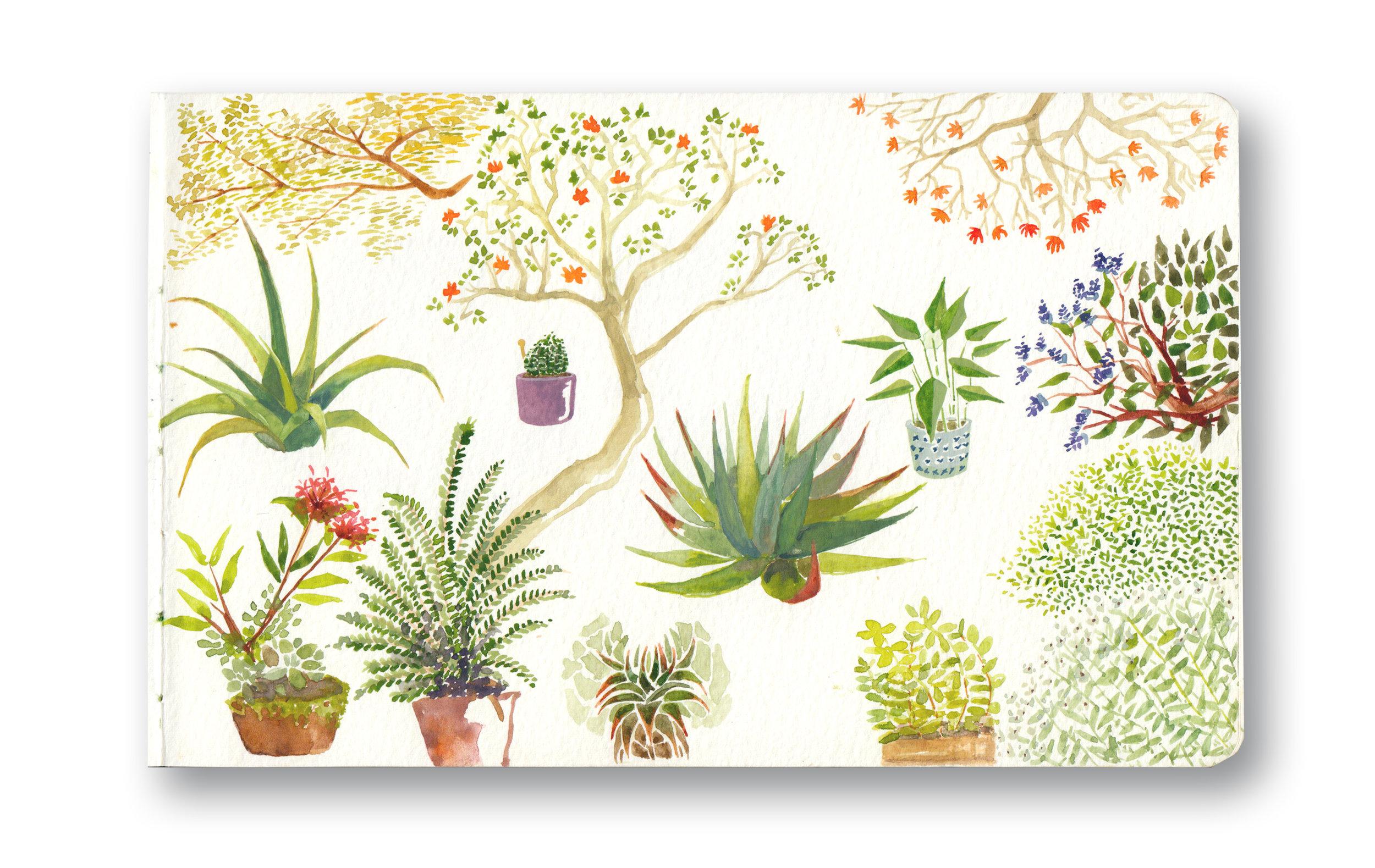 """Durban Garden - Durban, Sa  Watercolor & Gouache - MOleskine Sketchbook 5 x 8.25"""""""