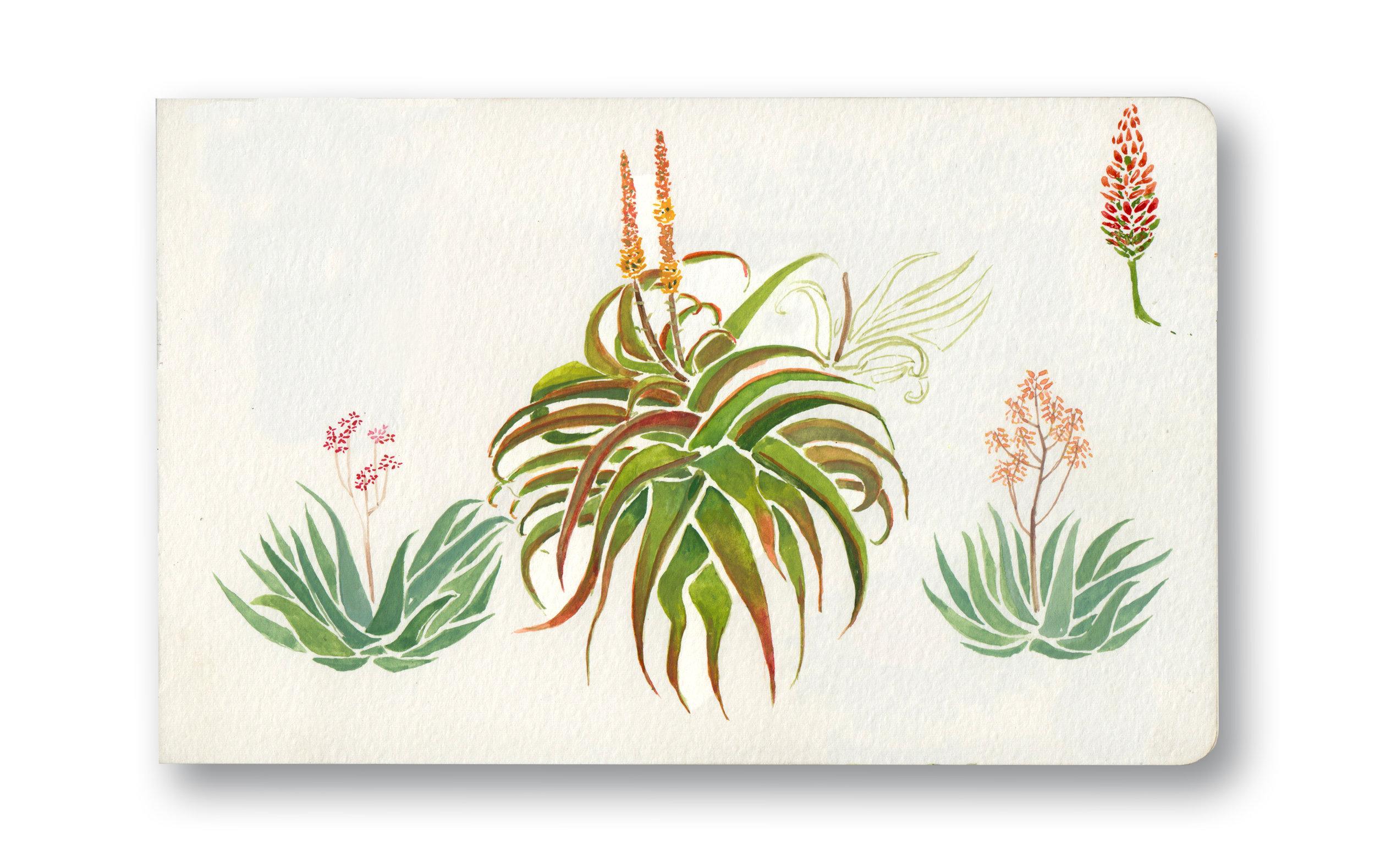 "Gran's Aloes - Durban, Sa  Watercolor & Gouache - MOleskine Sketchbook 5 x 8.25"""