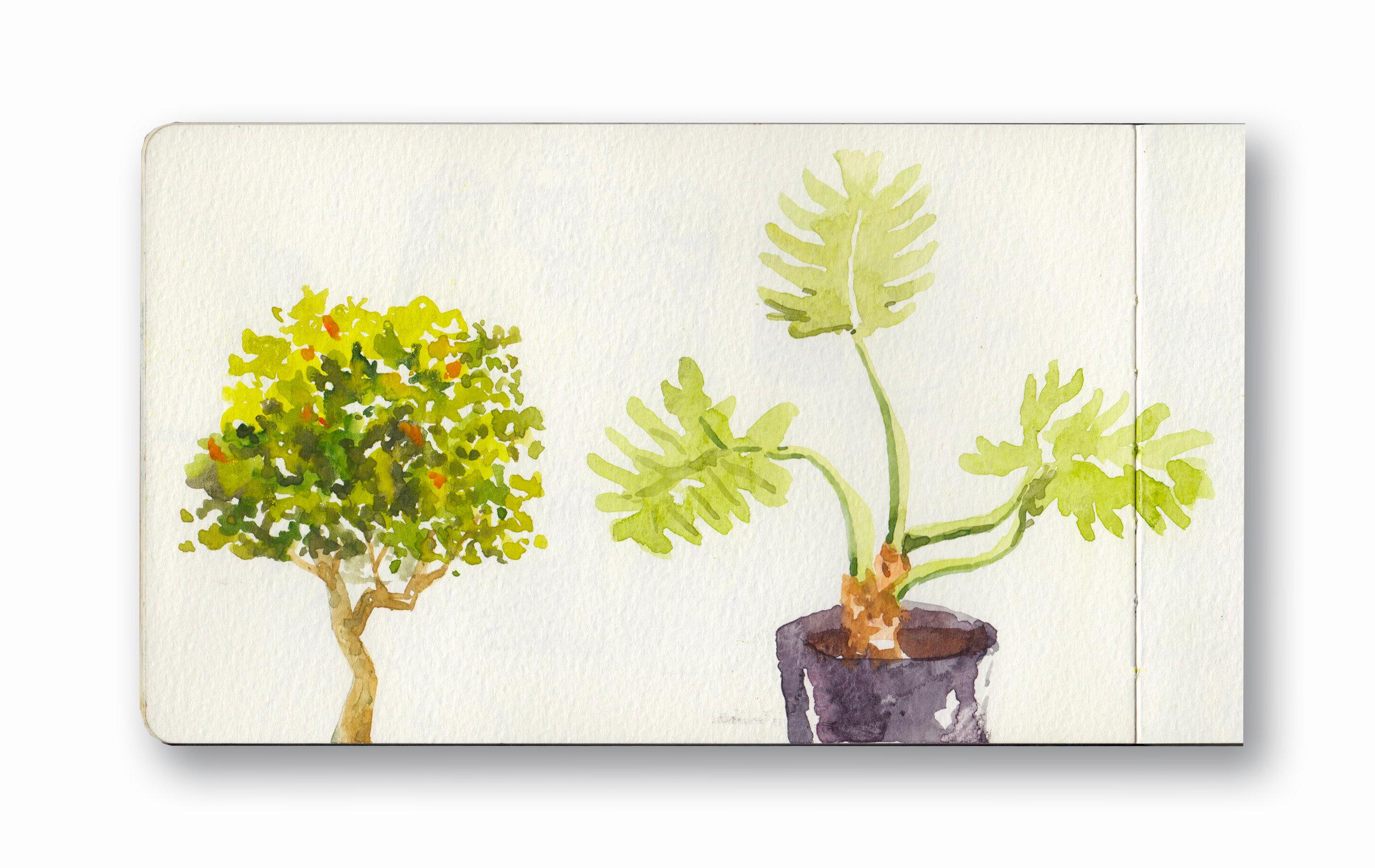 "Balcony Plants - Cape Town, Sa  Watercolor & Gouache - MOleskine Sketchbook 5 x 8.25"""