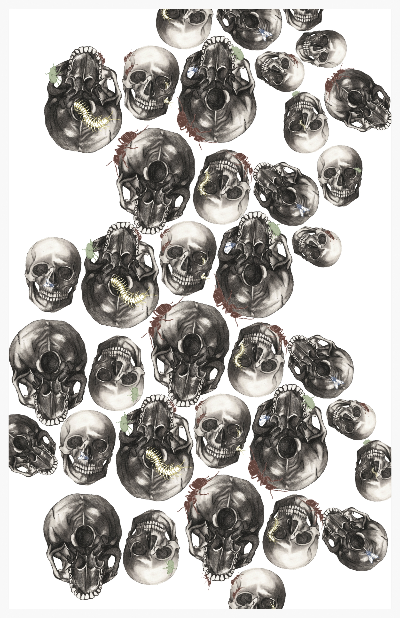 Skullz + Bugz , 2015.Graphite, illustrator,photoshop (11x17).