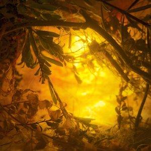 golden+tunnel.jpg