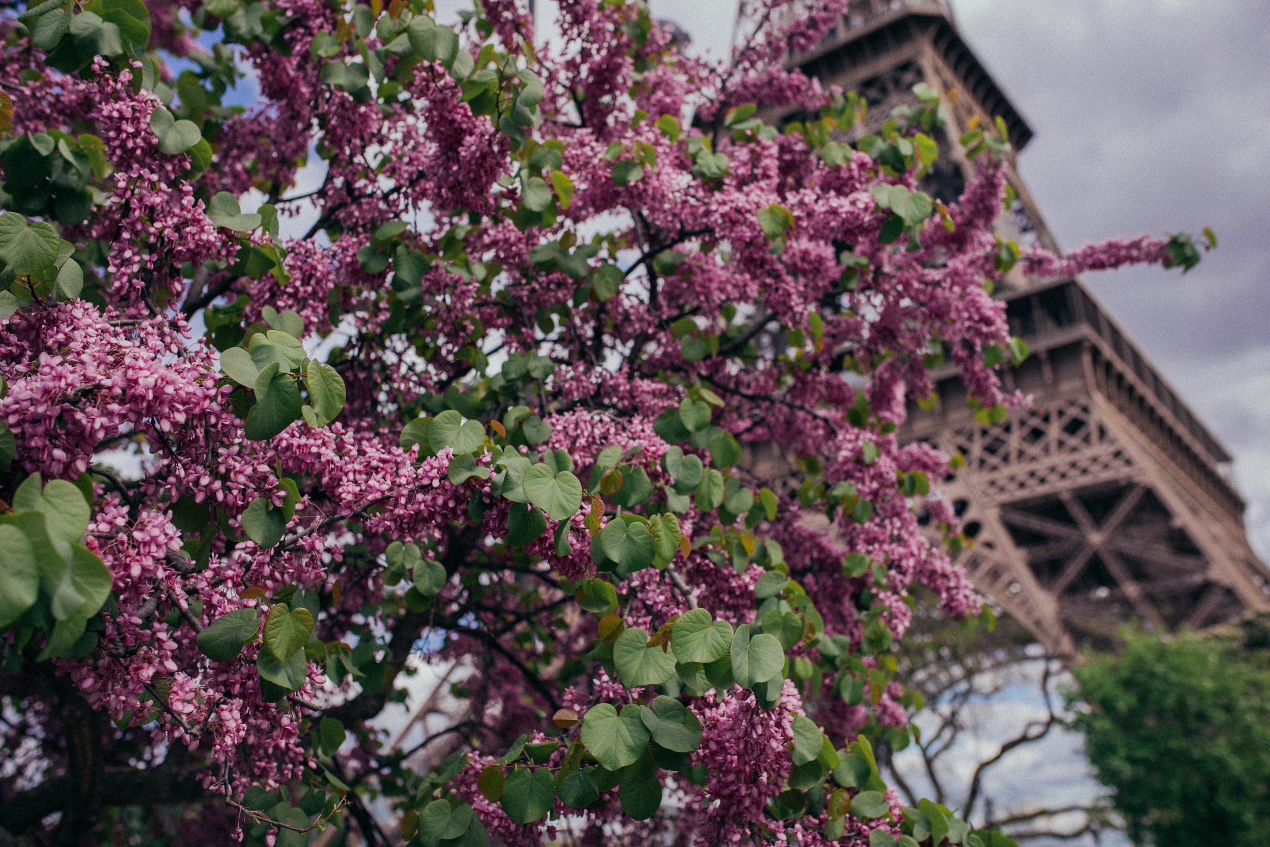 paris_april25_ (75 of 104).jpg