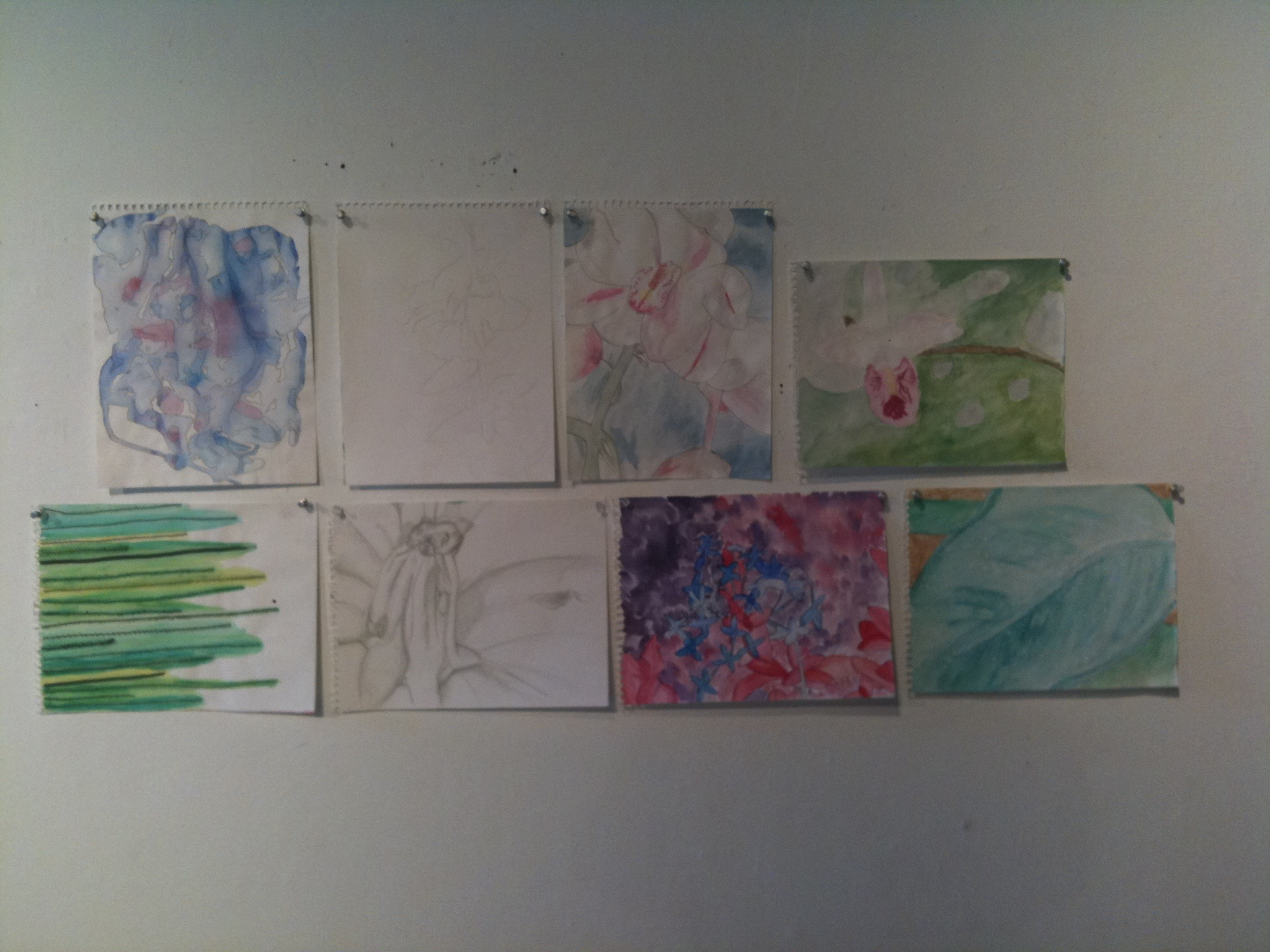 Same gallery, different class critique. These drawings/paintings were for my intermediate drawing class. I still love to draw and paint from nature today!