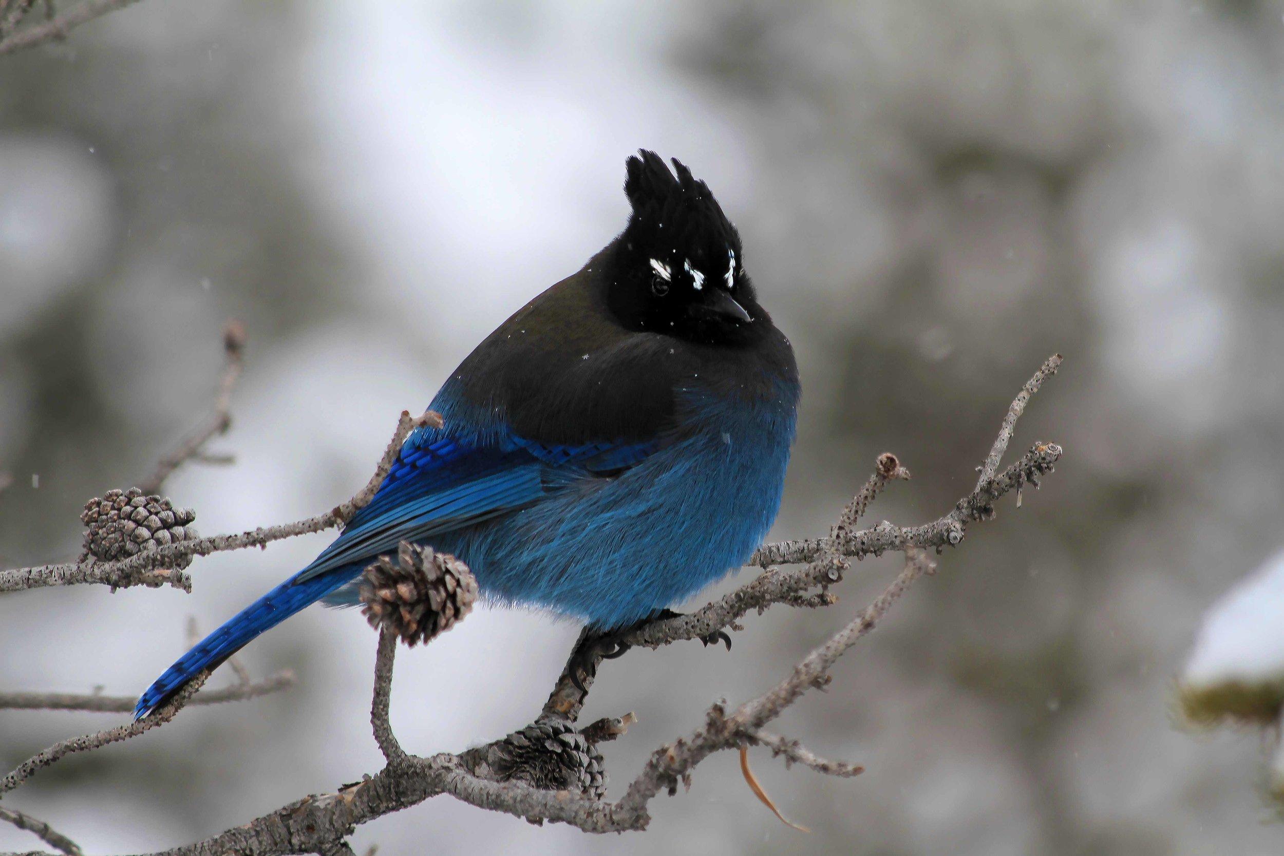 Web-Birdy.jpg