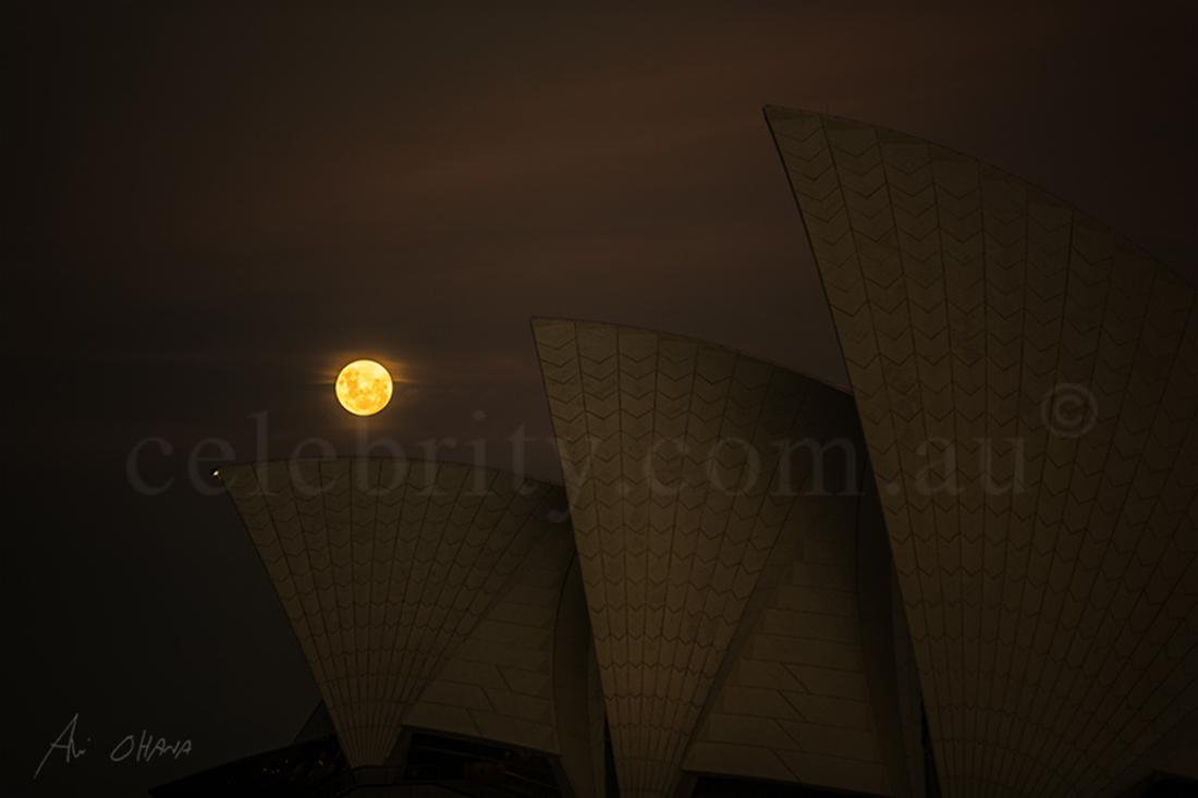 Autumn Moon — NEW