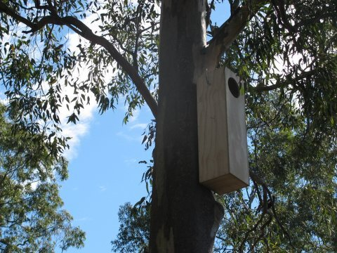 Possum Boxes we built for the BCC