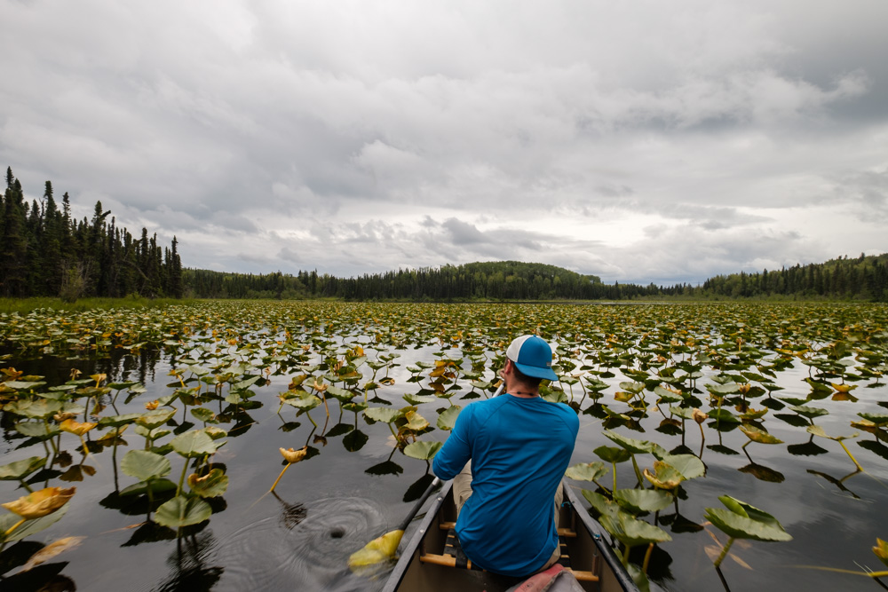 Paddling through Swan Lake system