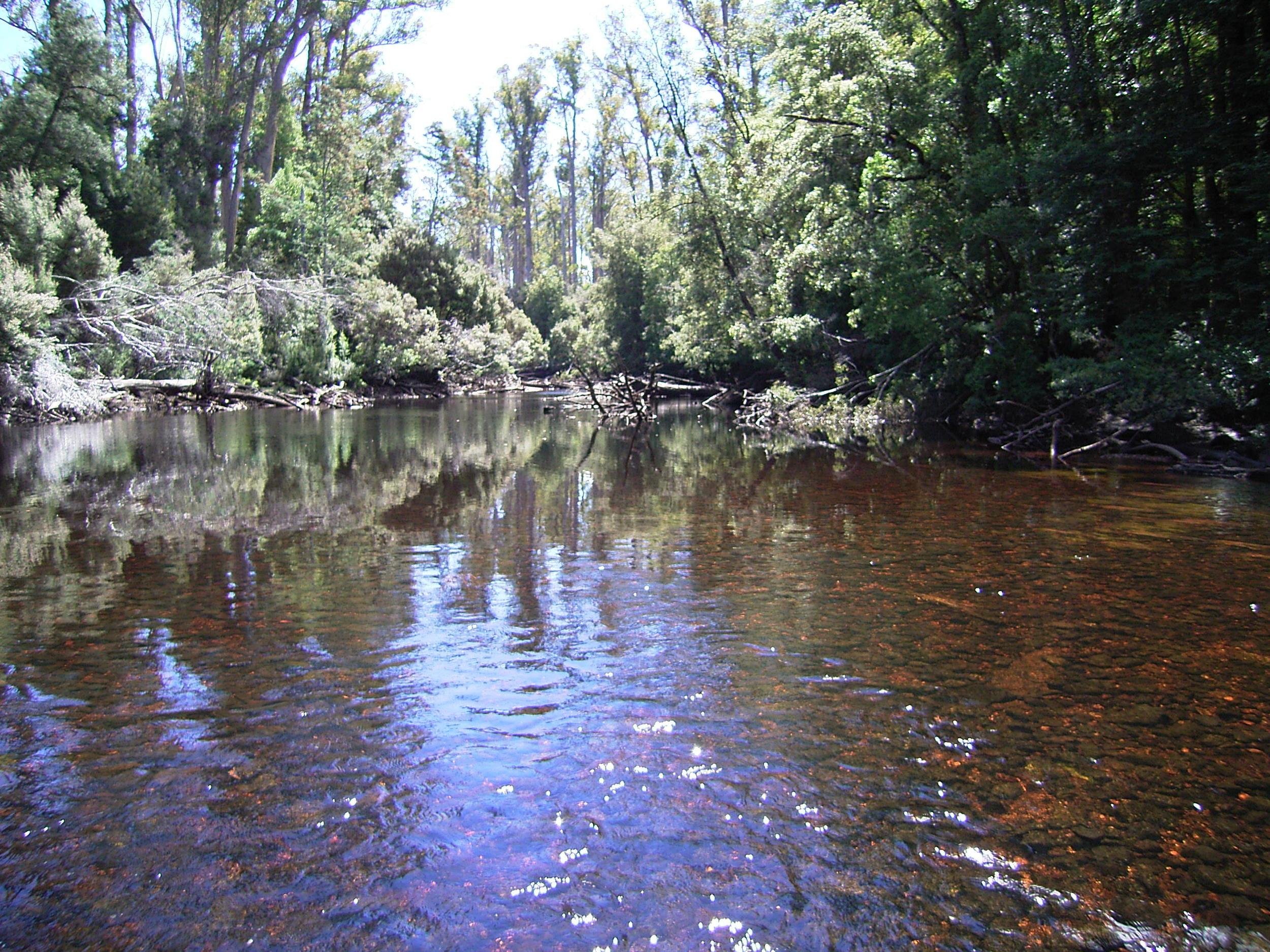 Gordon River