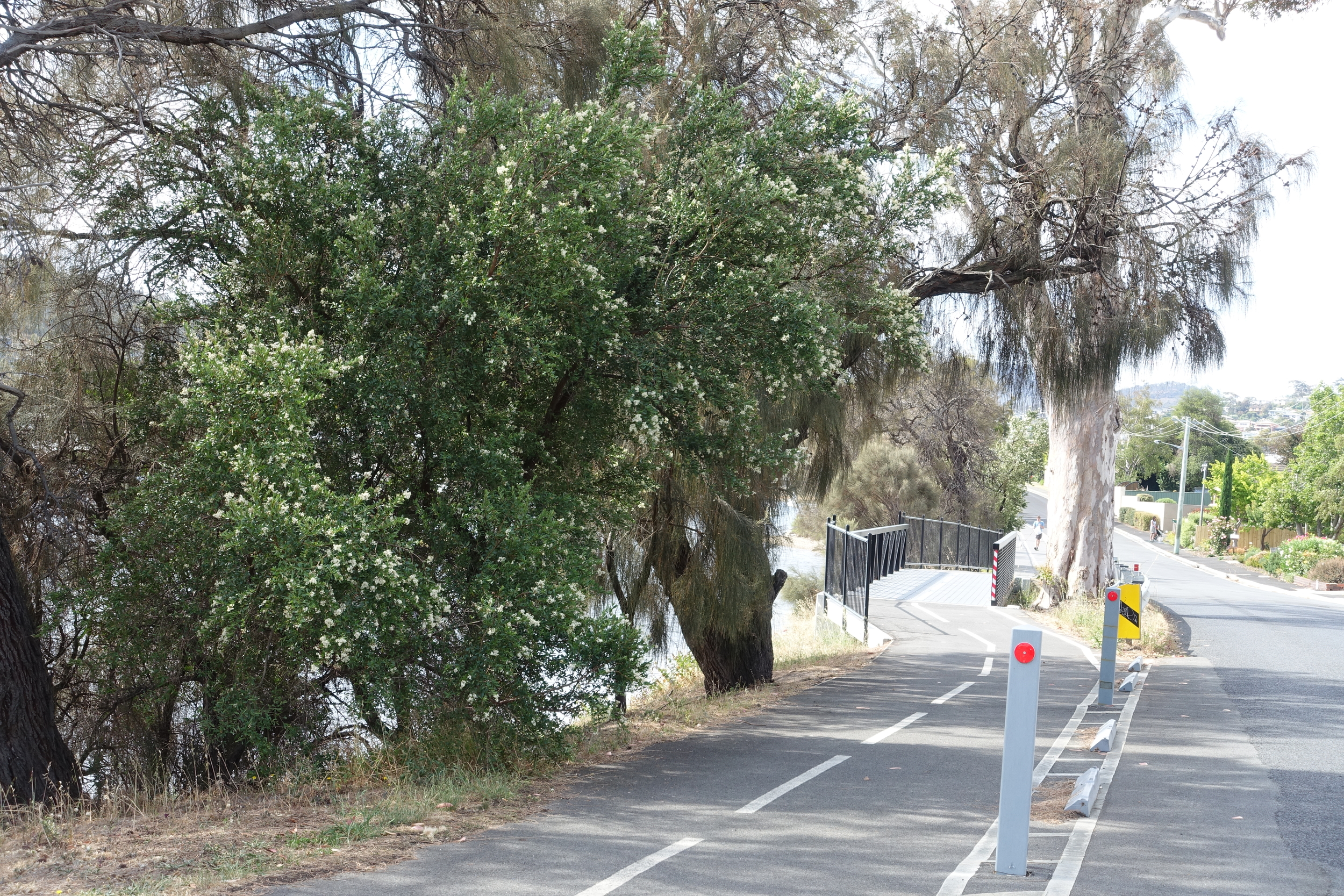 cycleway, rose bay
