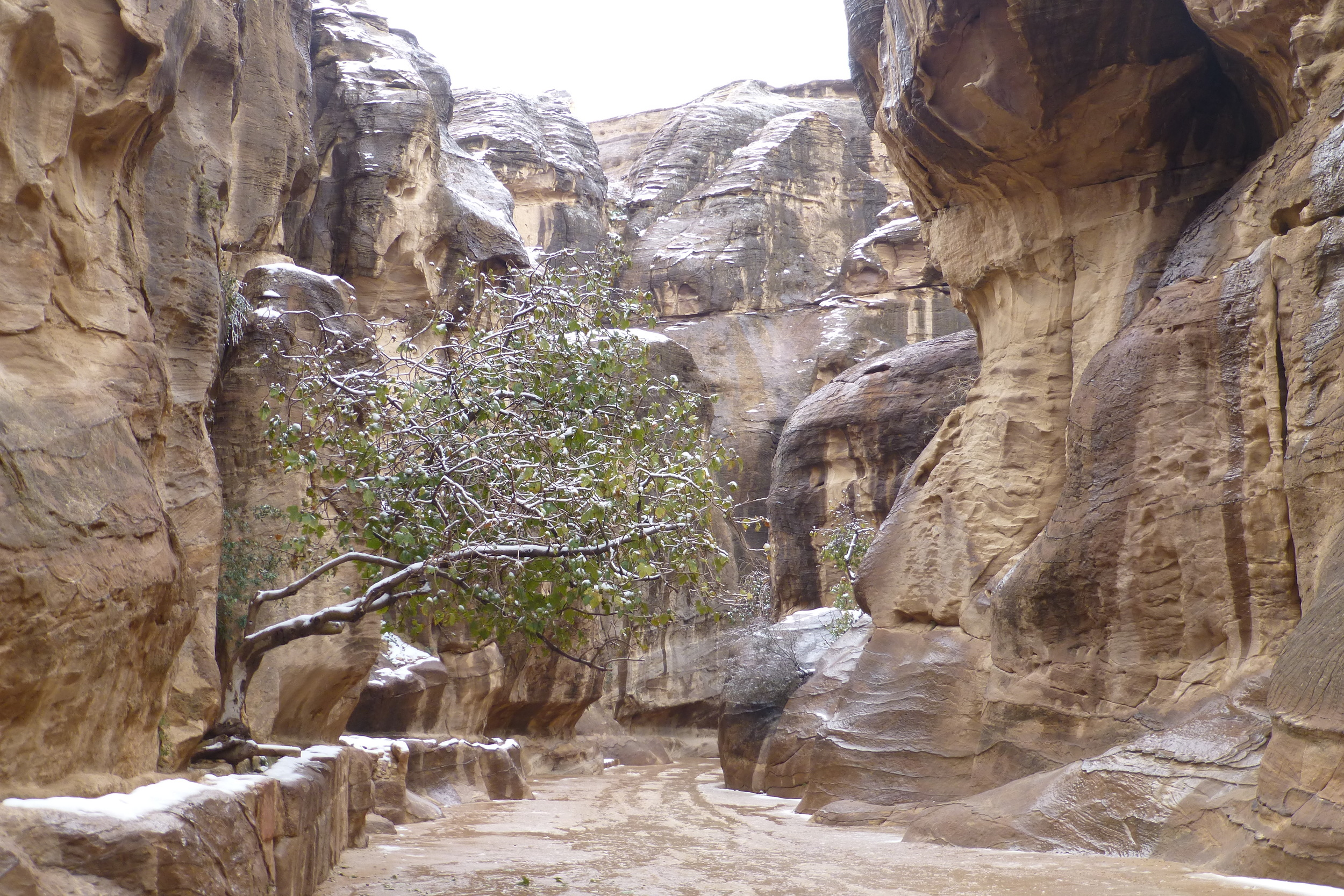in the siq - the entrance to petra