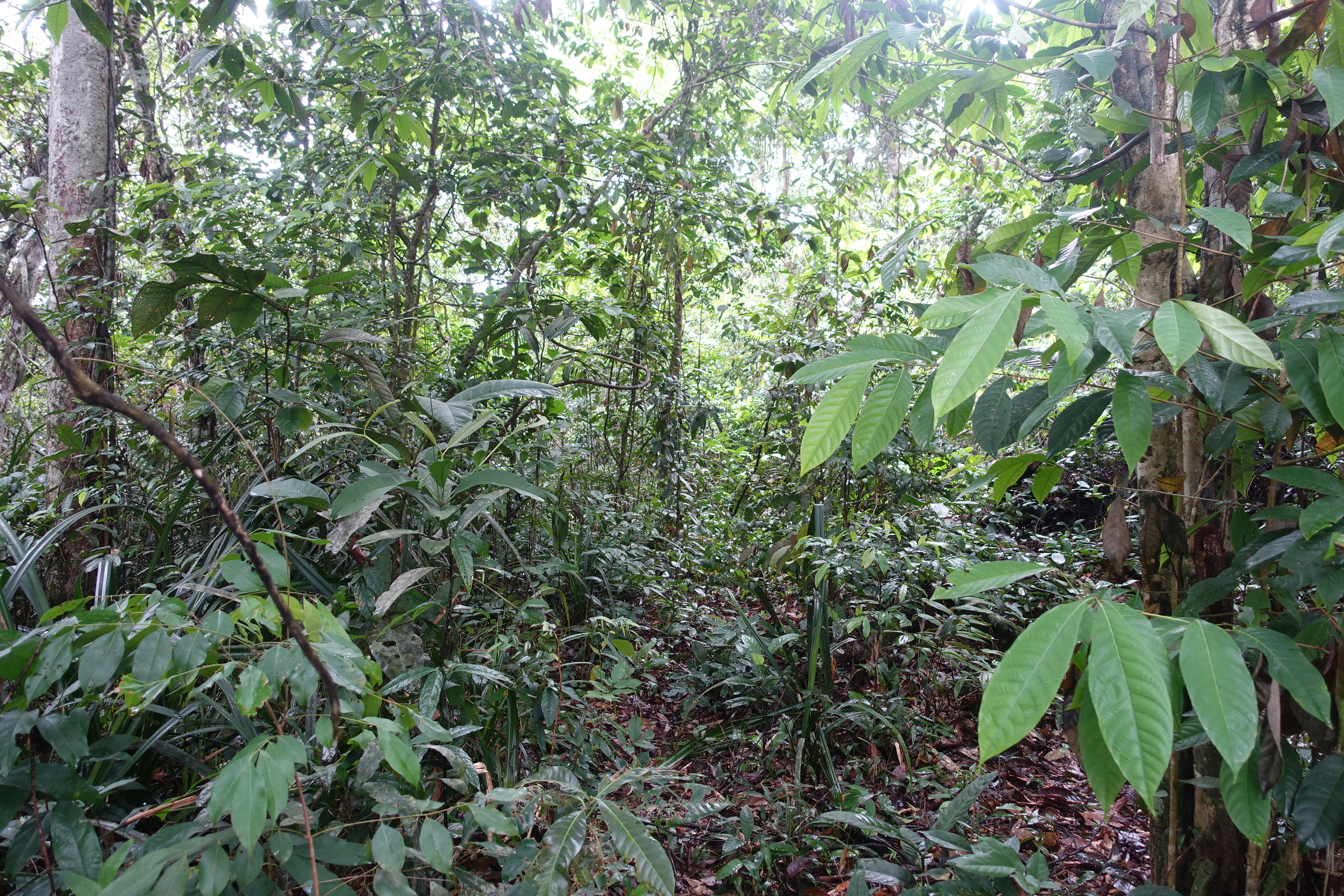 the jungle is thick and if you don't know what you're doing you will easily get lost