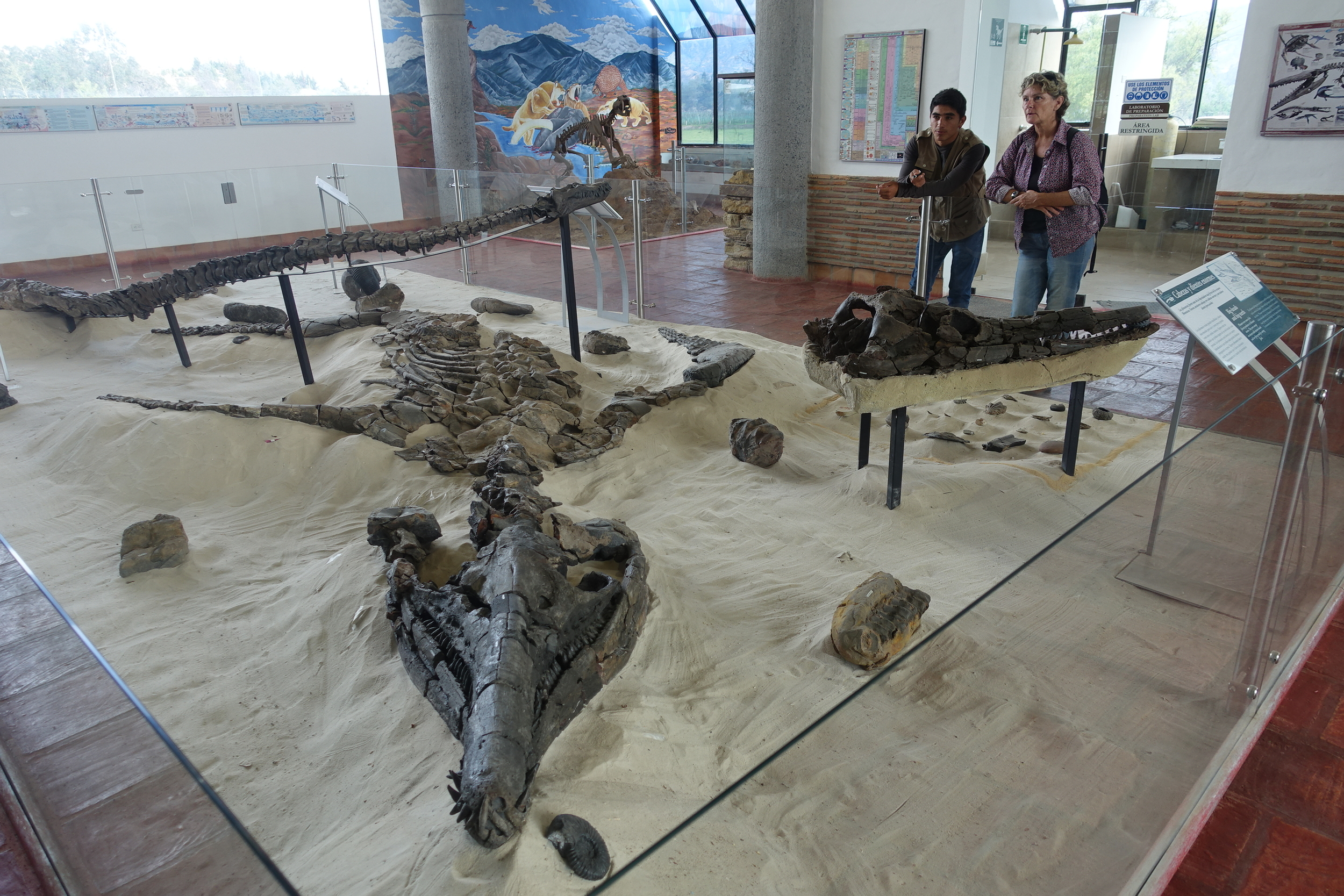 Displays of fossils found in the region around villa de leyva