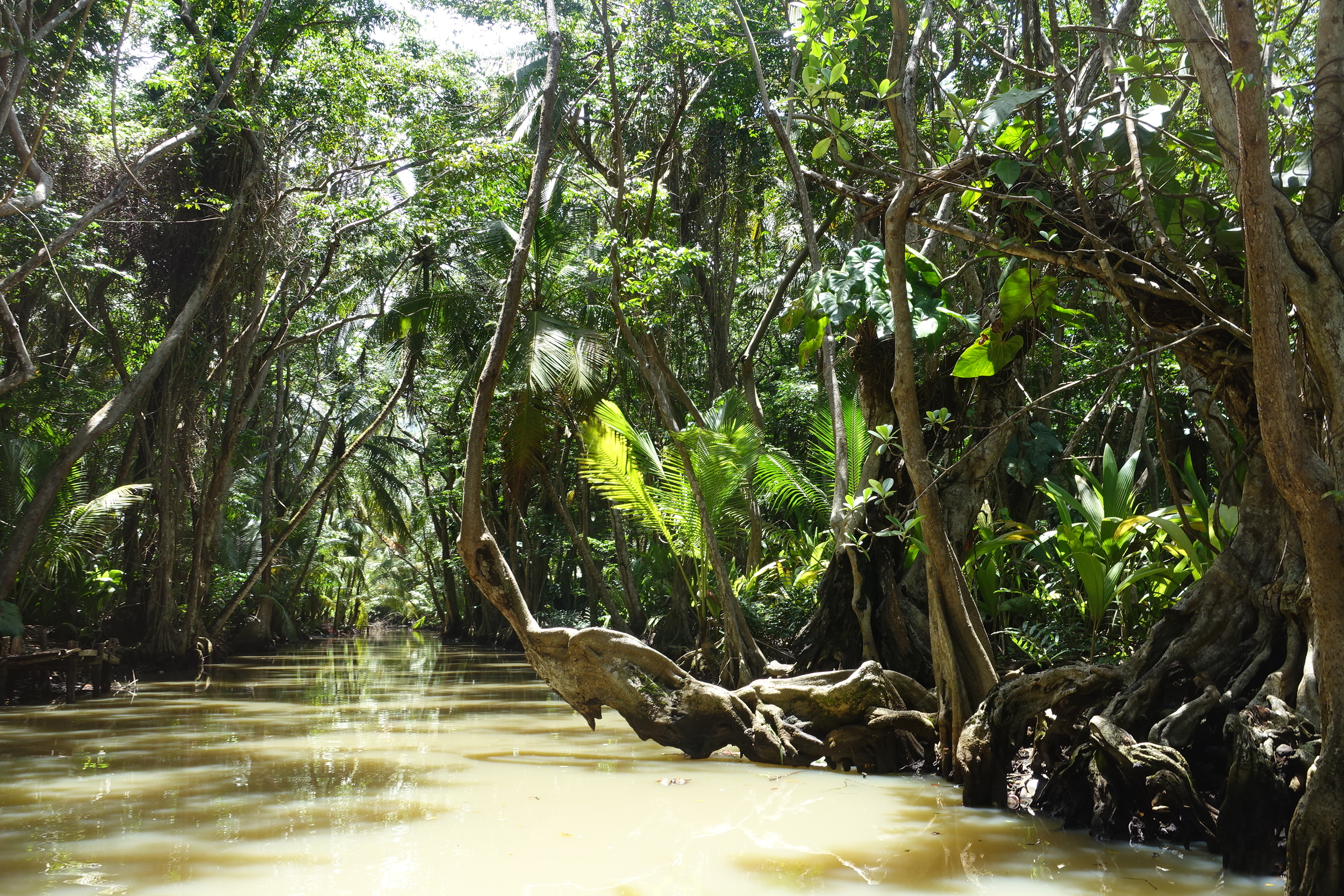 amazing rainforest trees line the indian river