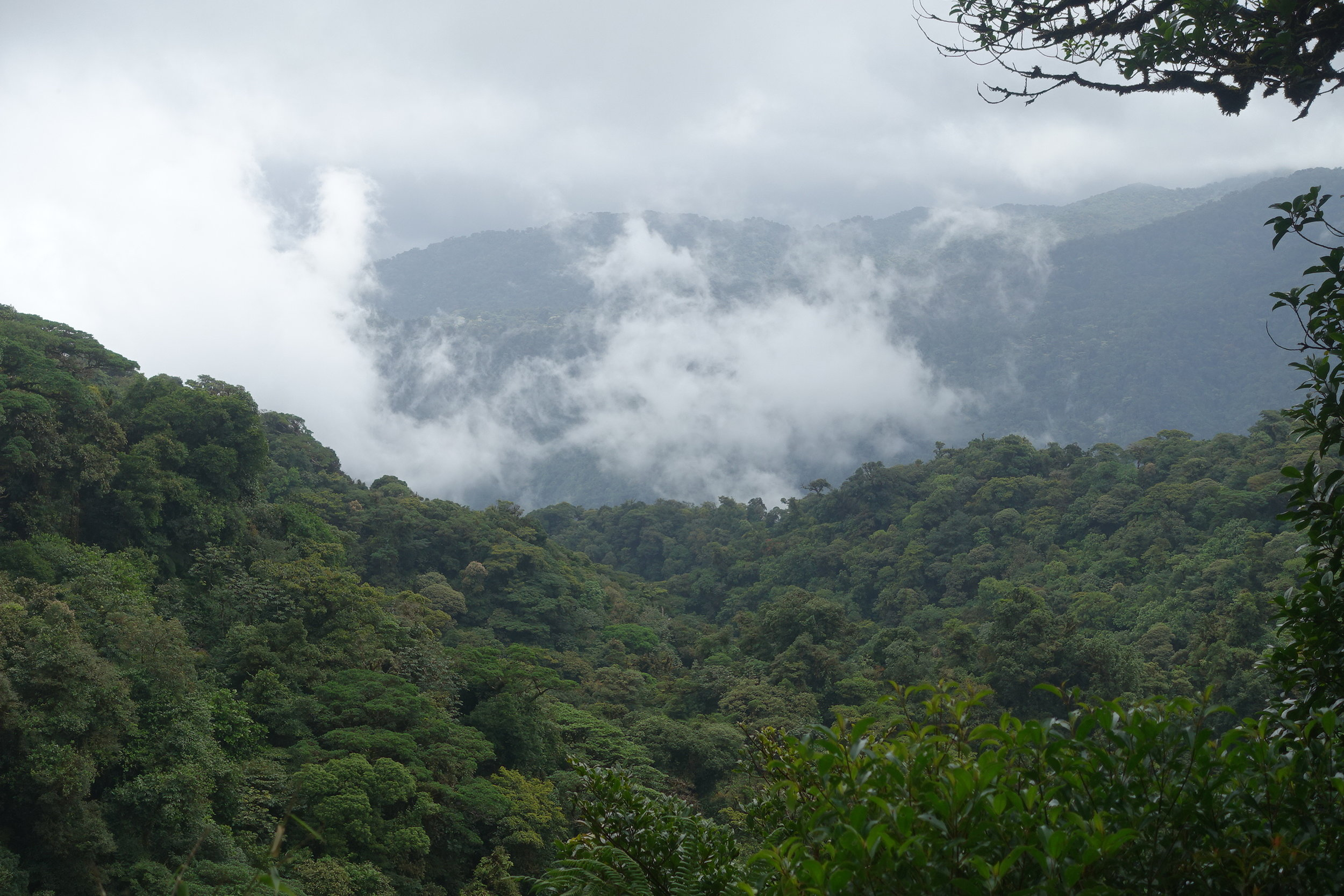 that's why it's called a cloud forest