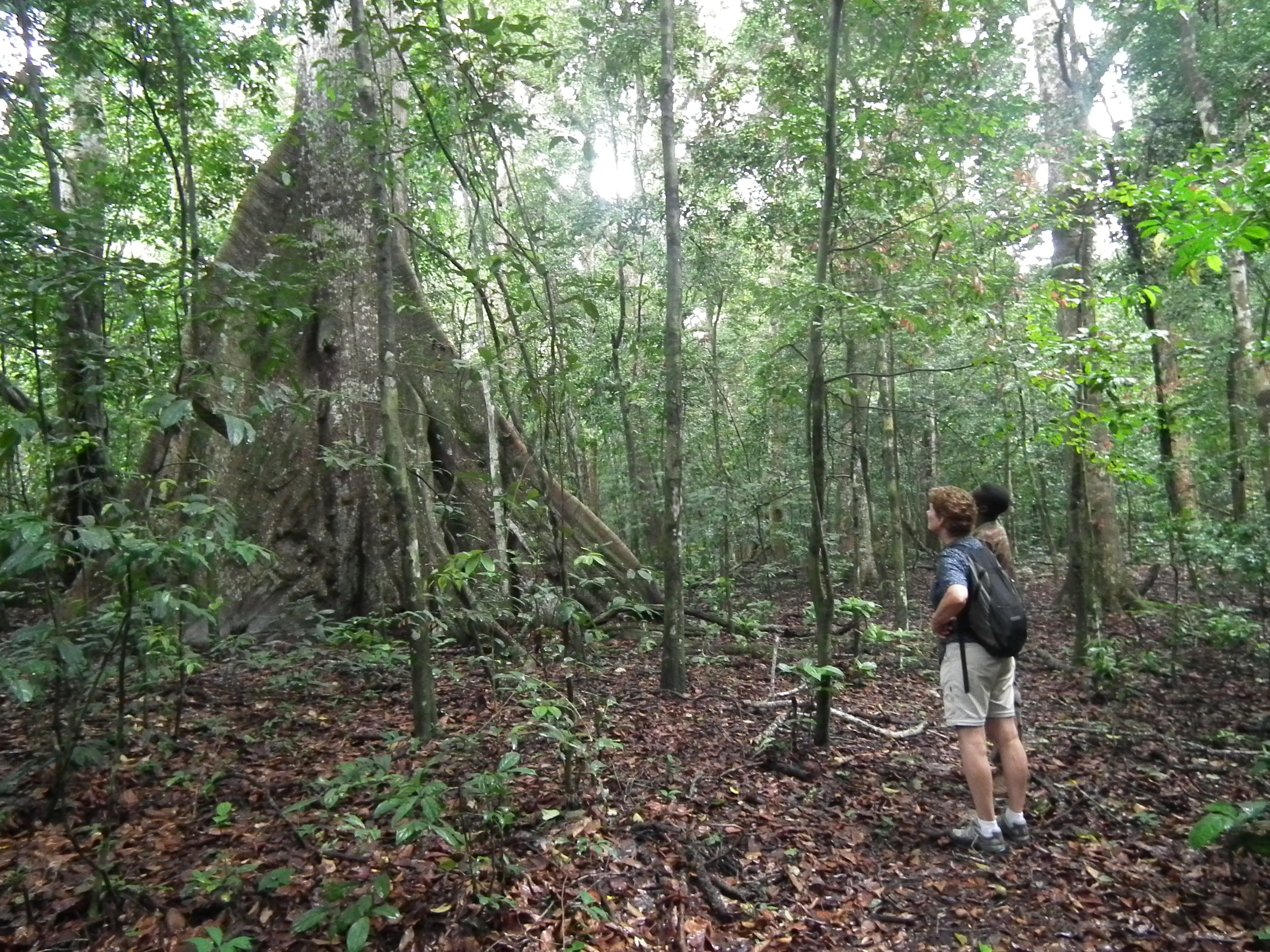 in search of lowland rainforest elephants. WE did eventually find one.