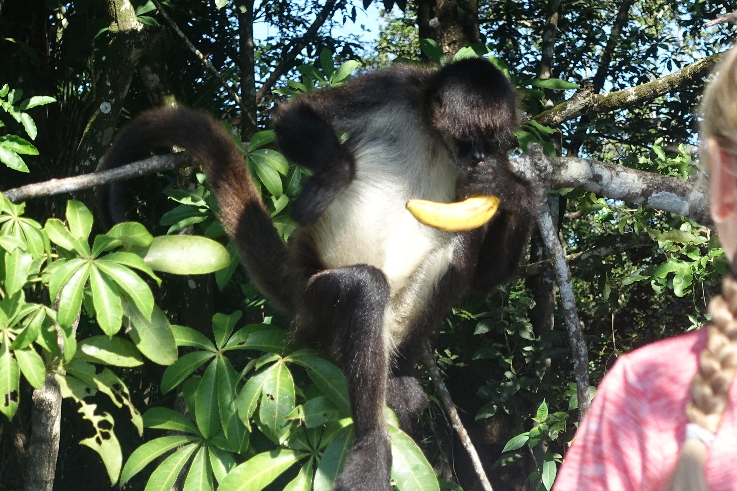 a spot of monkey feeding along the way