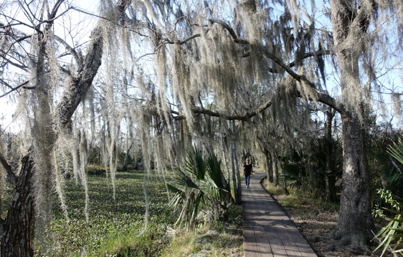 bayou coquille trail.. Hanging from the trees is the distinctive spanish moss.