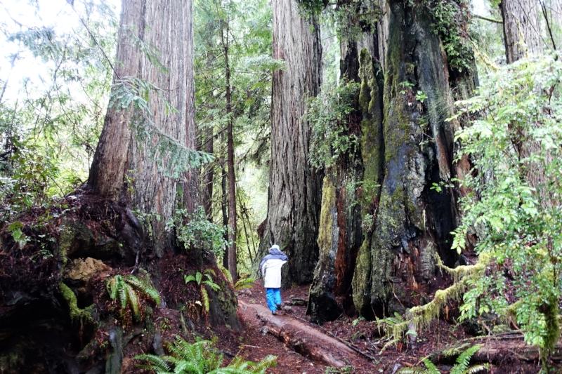 on the big tree trail