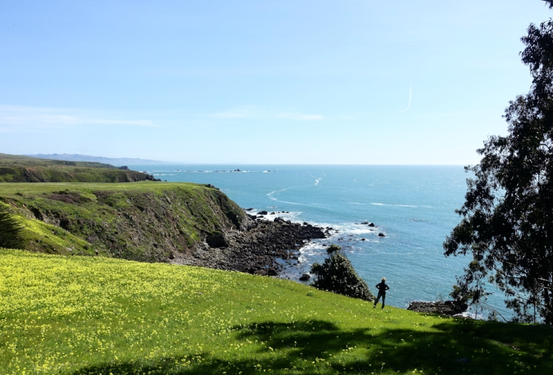 the view of the coast near fort ross