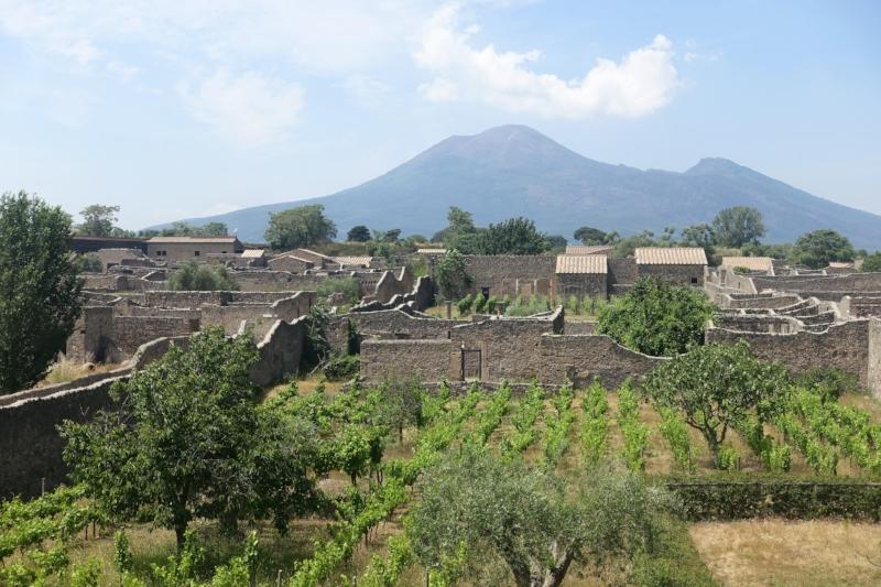 Restored ancient pompeian vineyard