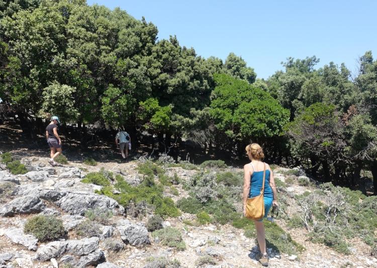 randi forest's rare oaks