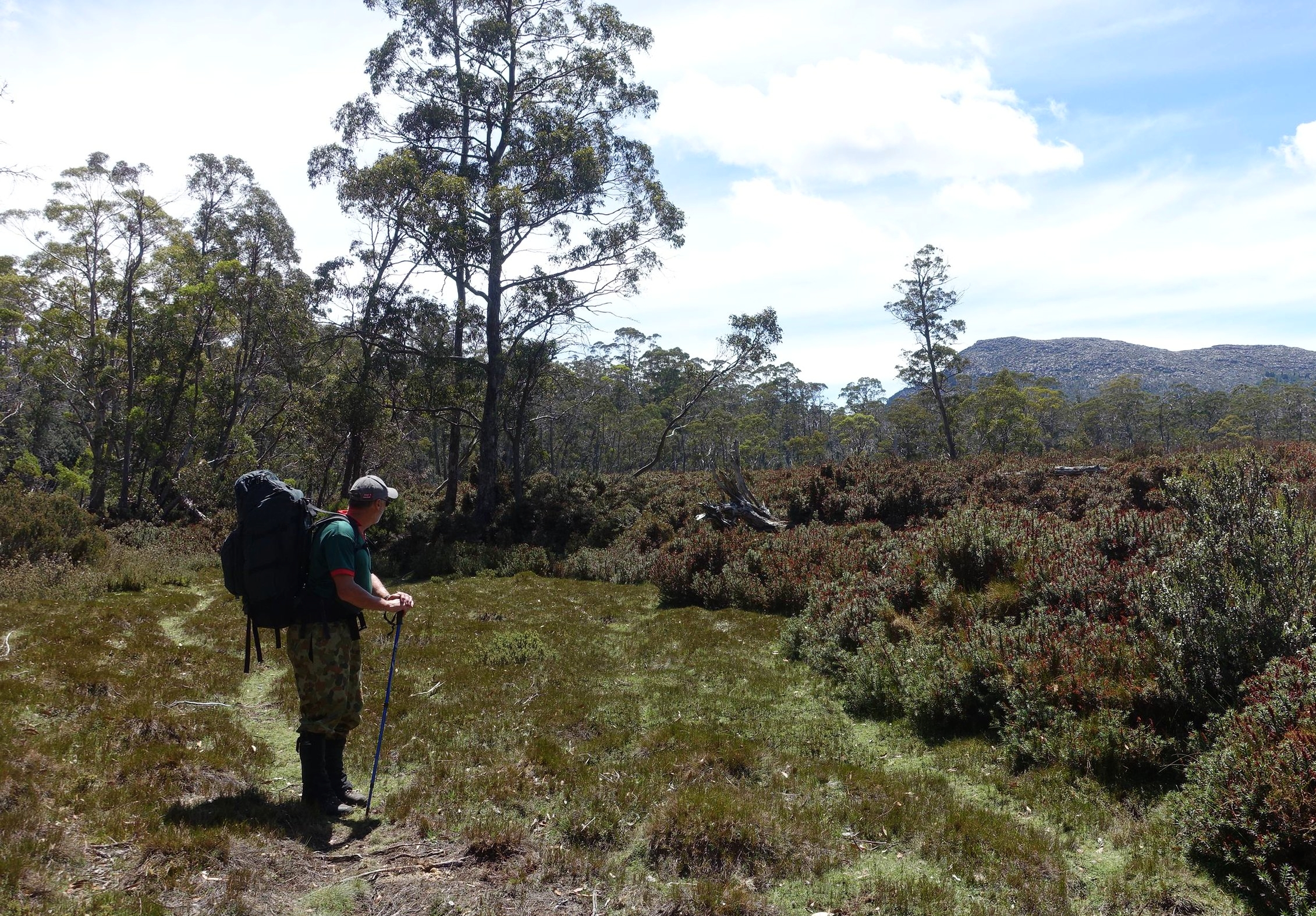 first views of mt rogoona