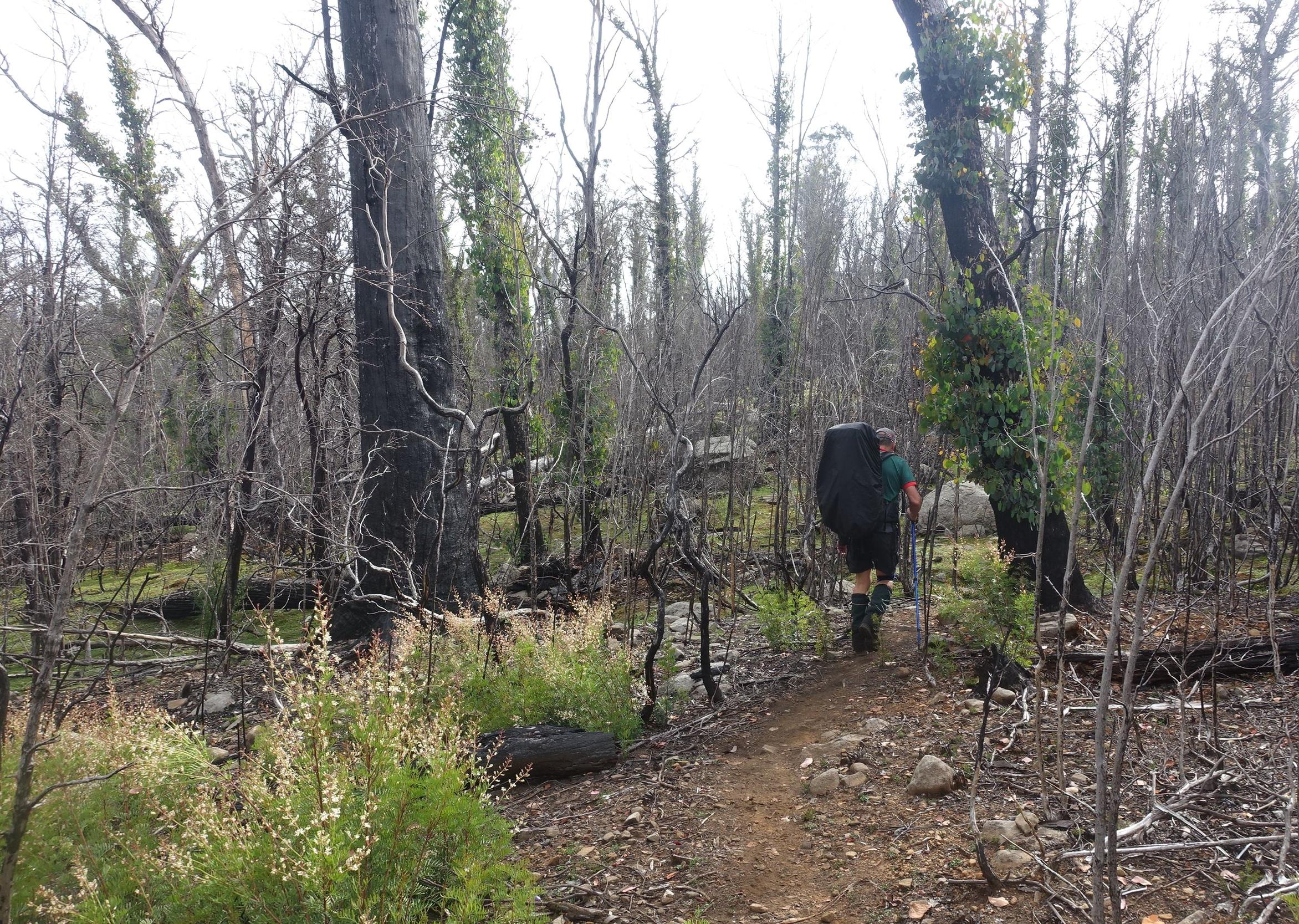 a lot of bushfire damage near lake bills