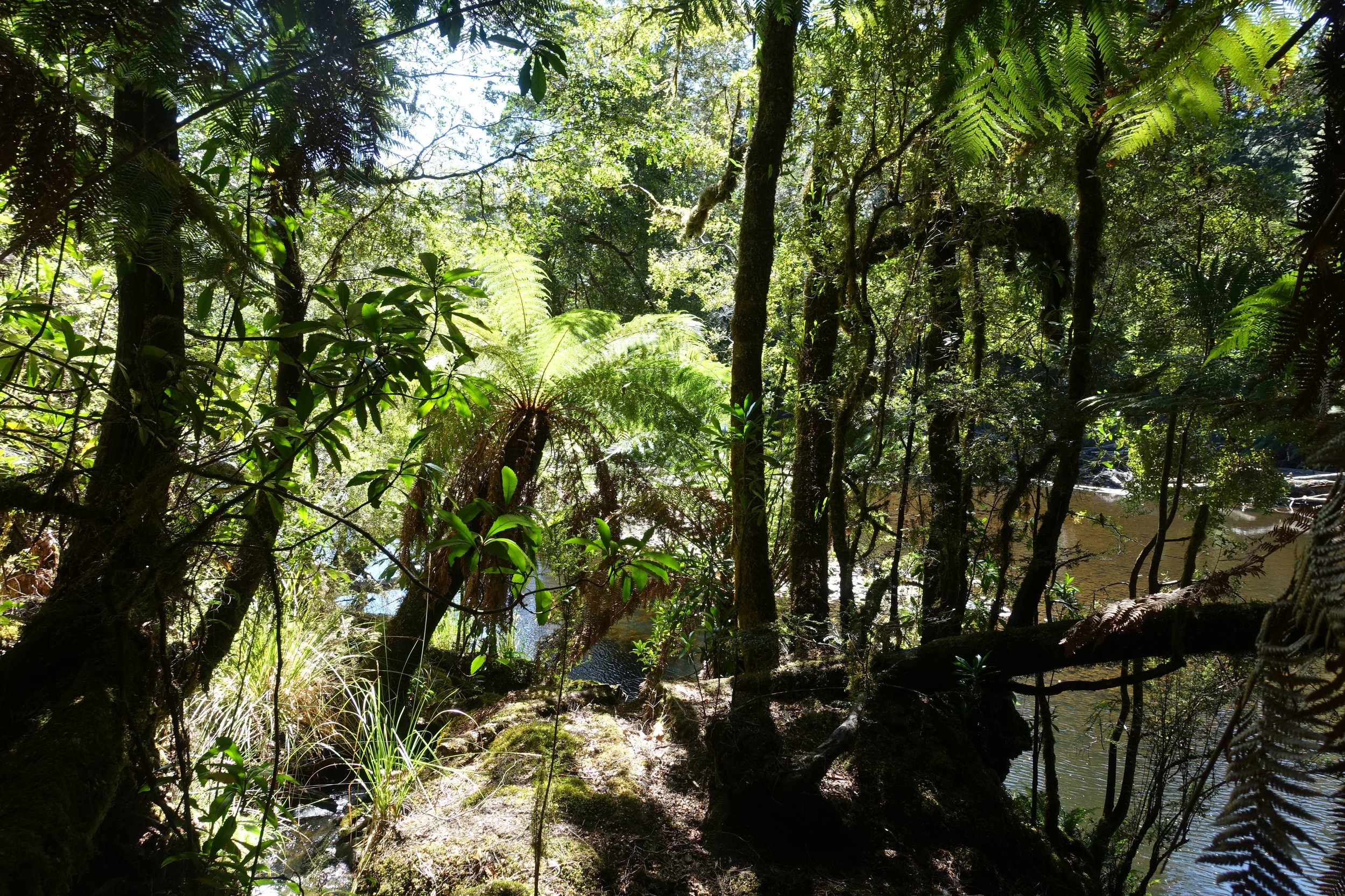 rainforest on the Huskisson river