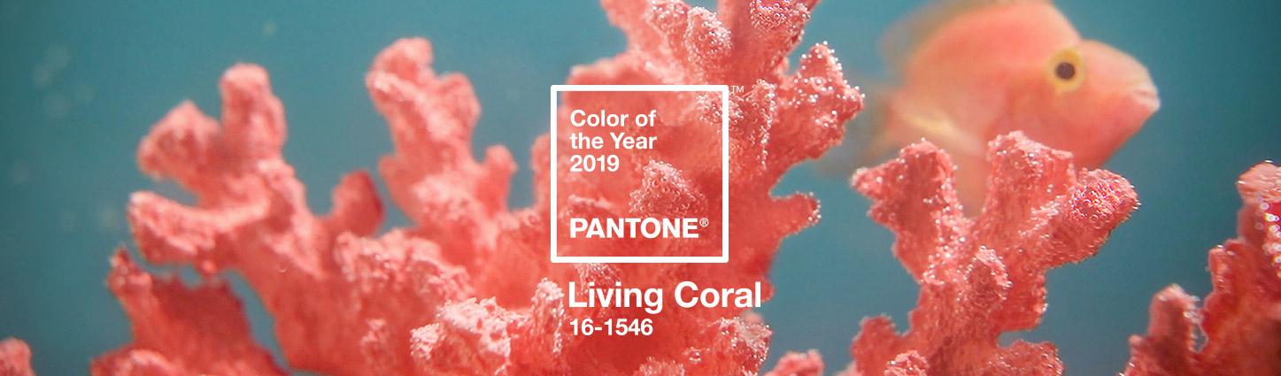 Living Coral / Color of the Year 2019 via  Pantone
