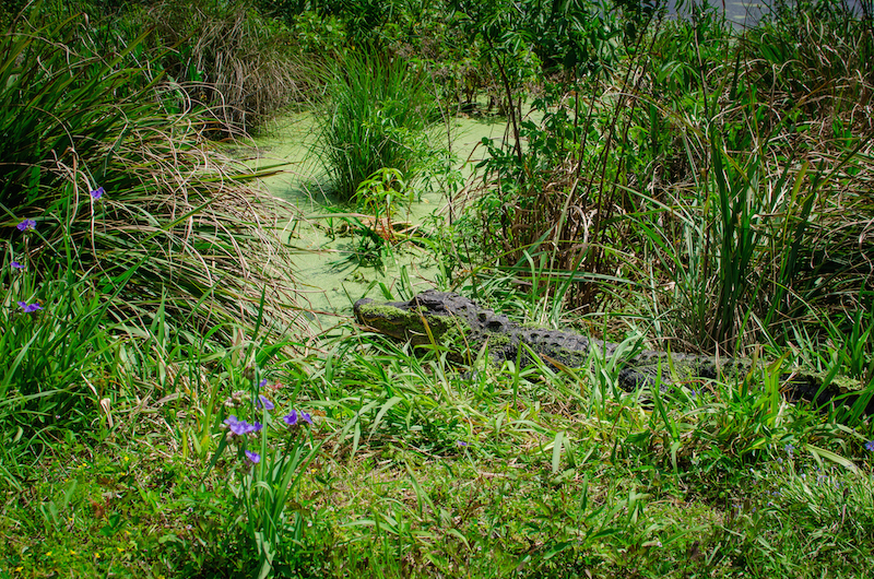 St. Marks Wildlife Refuge-14.jpg