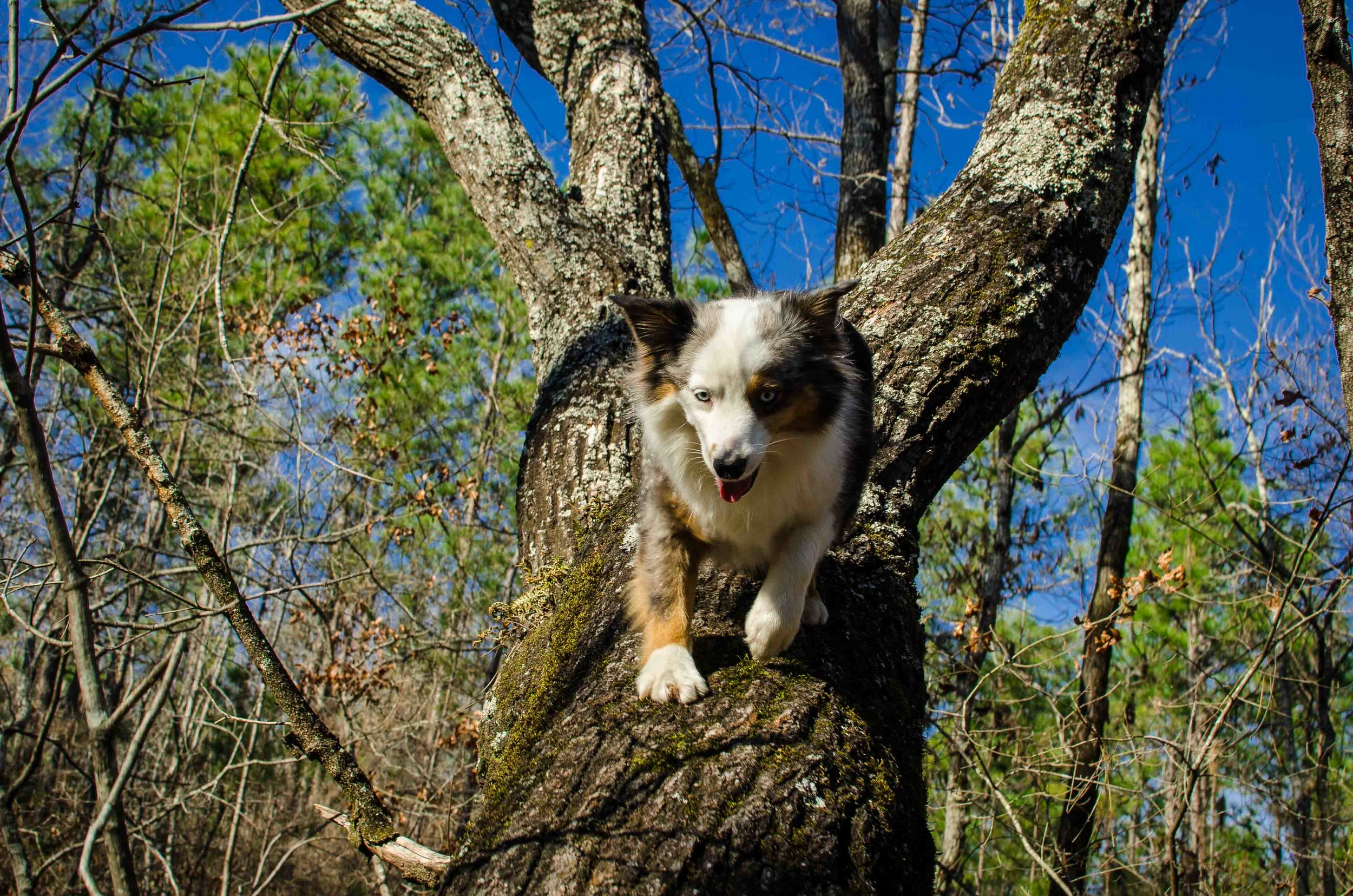 Siku Tree-13.jpg