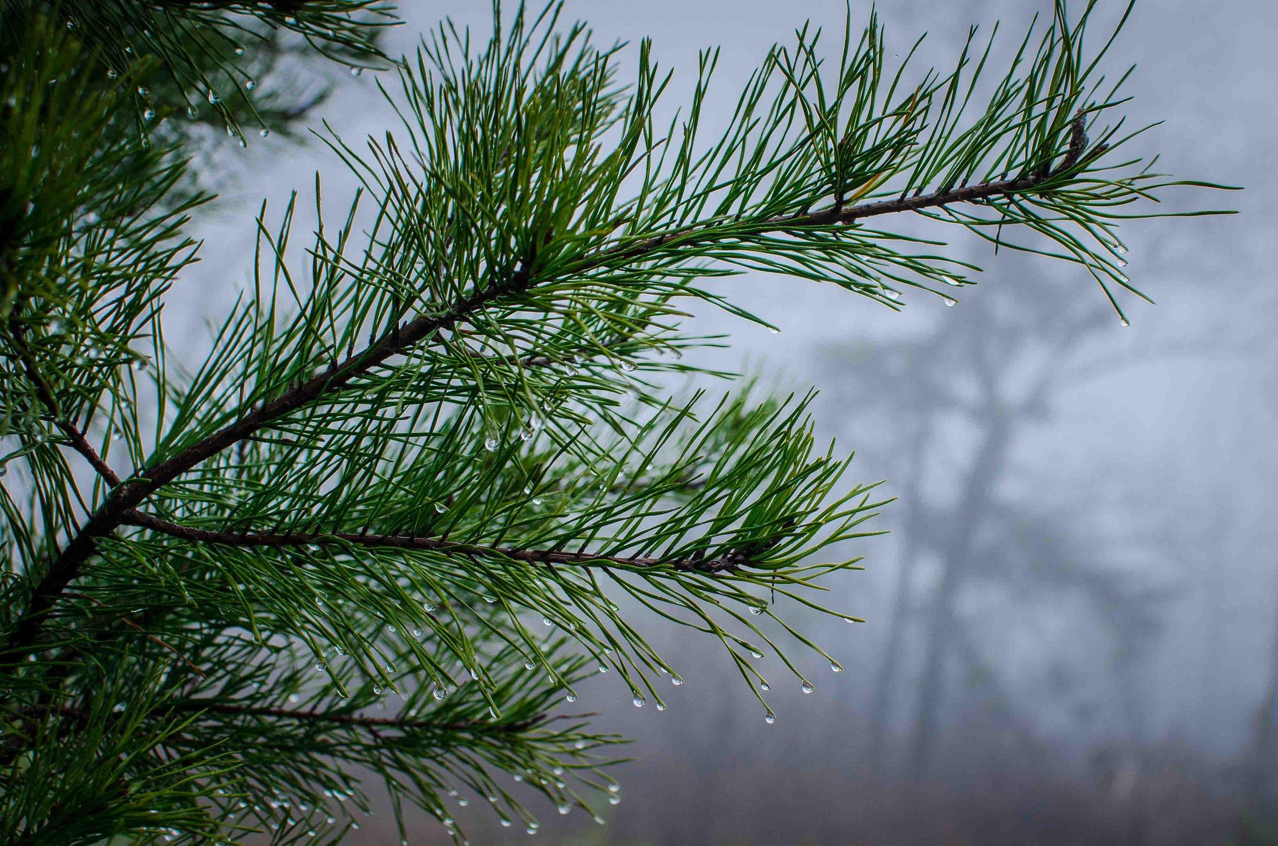Mist-2.jpg