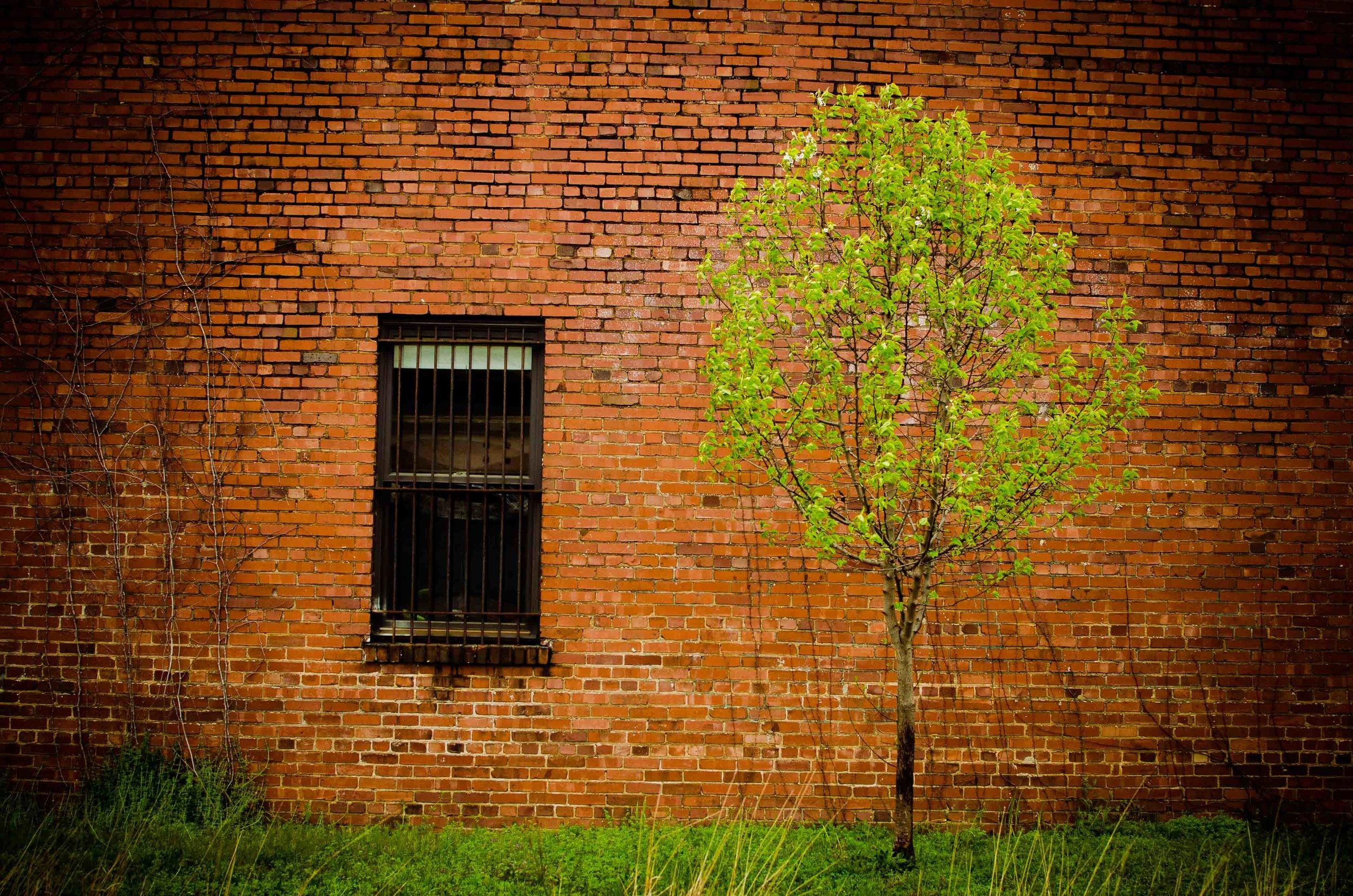 Lonely Tree-4.jpg