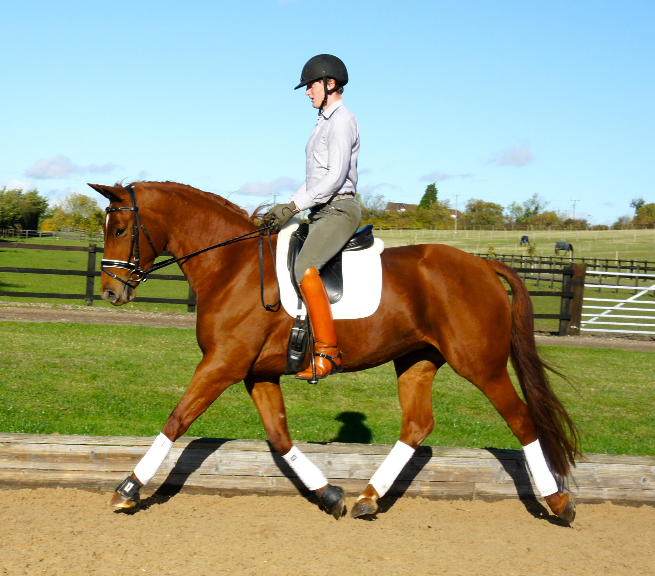 Princess   Stable Name : Princess  Colour : Chestnut  Height : 16.2  Sex : Mare  Breeding : Weserstar M  Country of Origin : GB  Year Foaled : 2007  Level :Novice