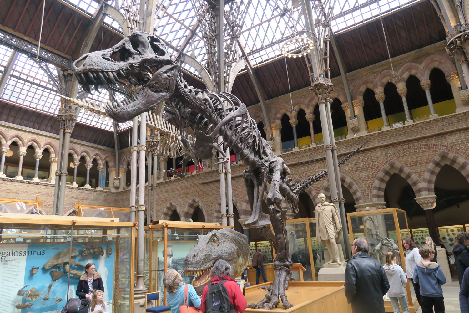 Cast of a 'small' T-Rex fossil, found by one of those 'amateur' fossil hunter