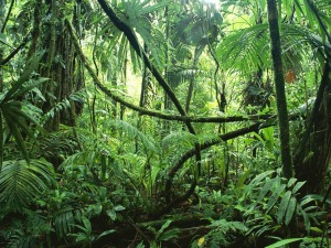 Amazon Rainforest at Ground Level