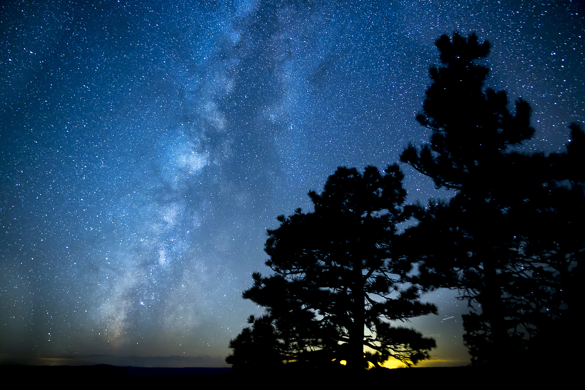 Milky Way and Pine Trees